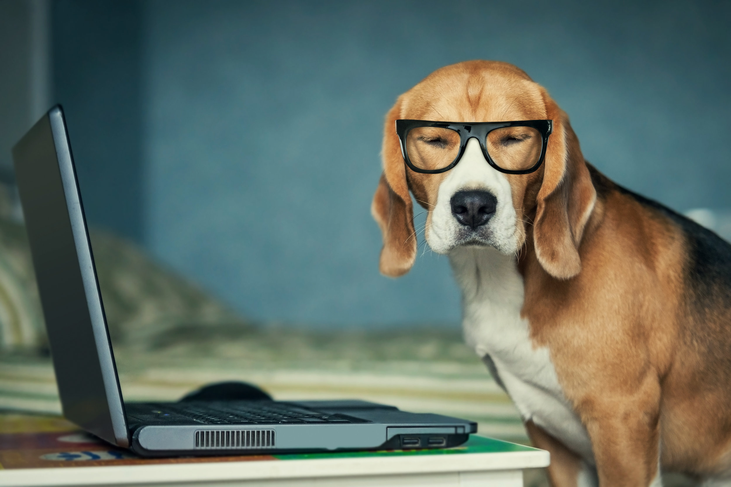 beagle with computer.jpg