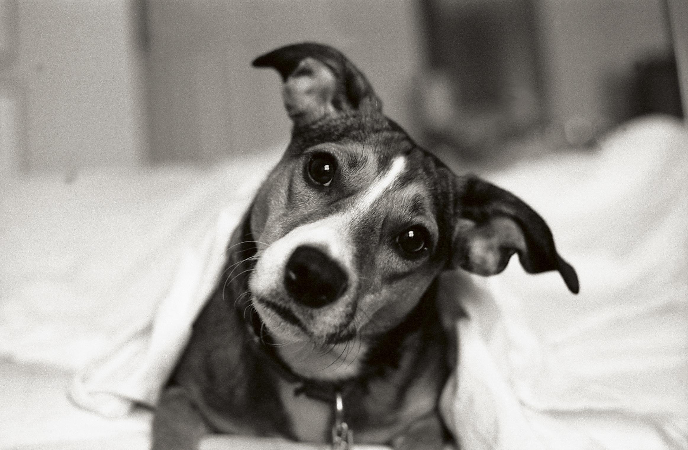 questioning dog.jpg