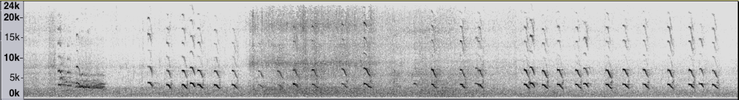 A sonogram shows the piercing,staccato texture of the Arctic Tern's song.