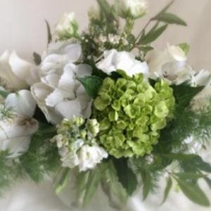 white-green-hydrangea-golden-valley.png