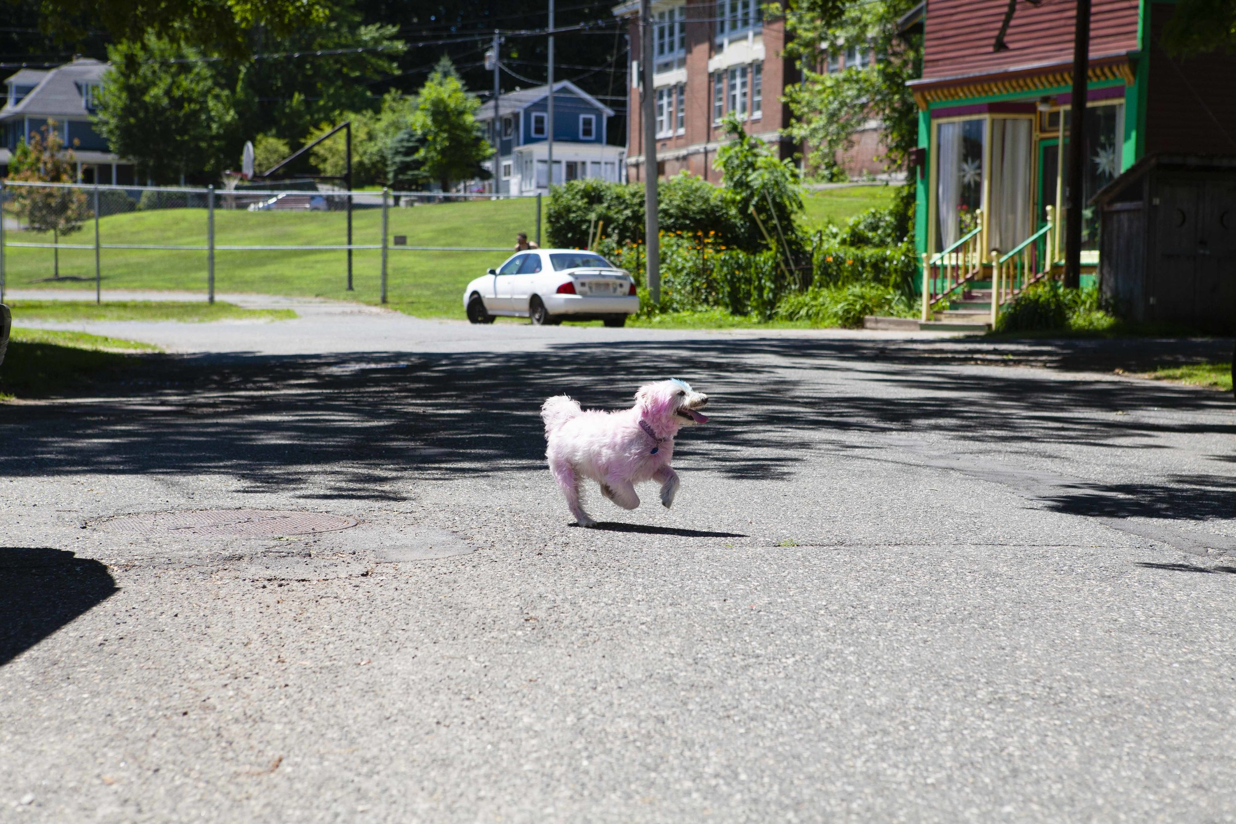 Welcome back Yukiko! Yes, the dog is pink. (and blue)