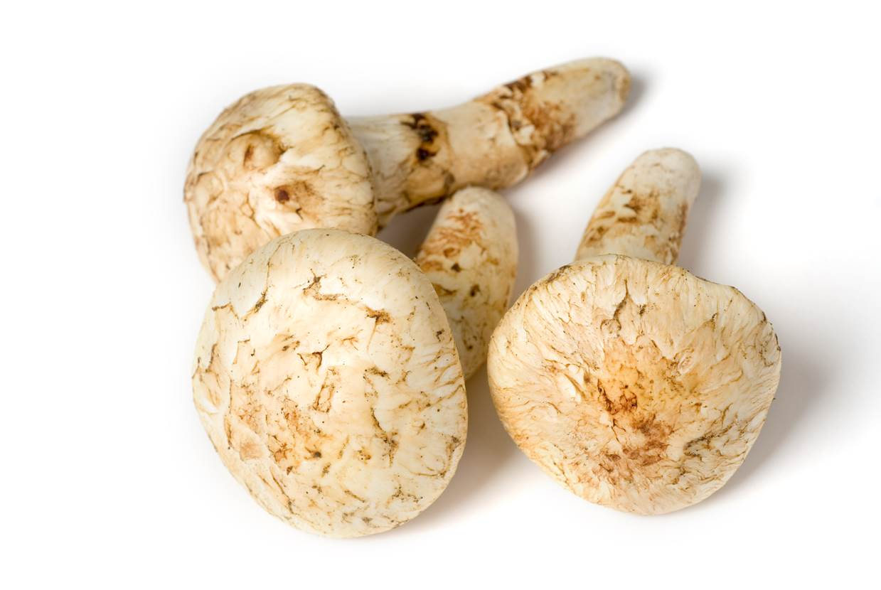 Washington State Matsutakes