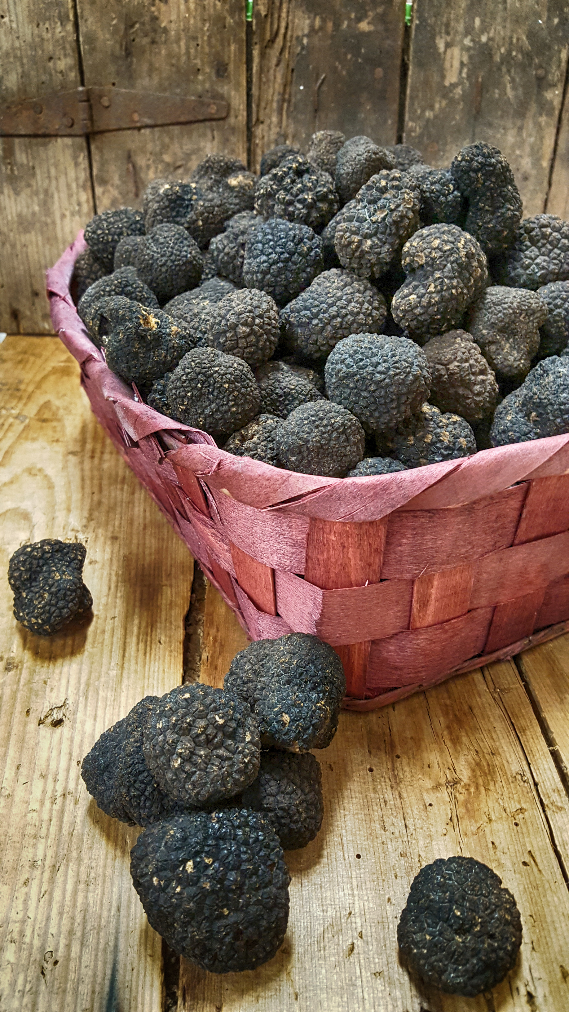 The Last of the Summer Truffles