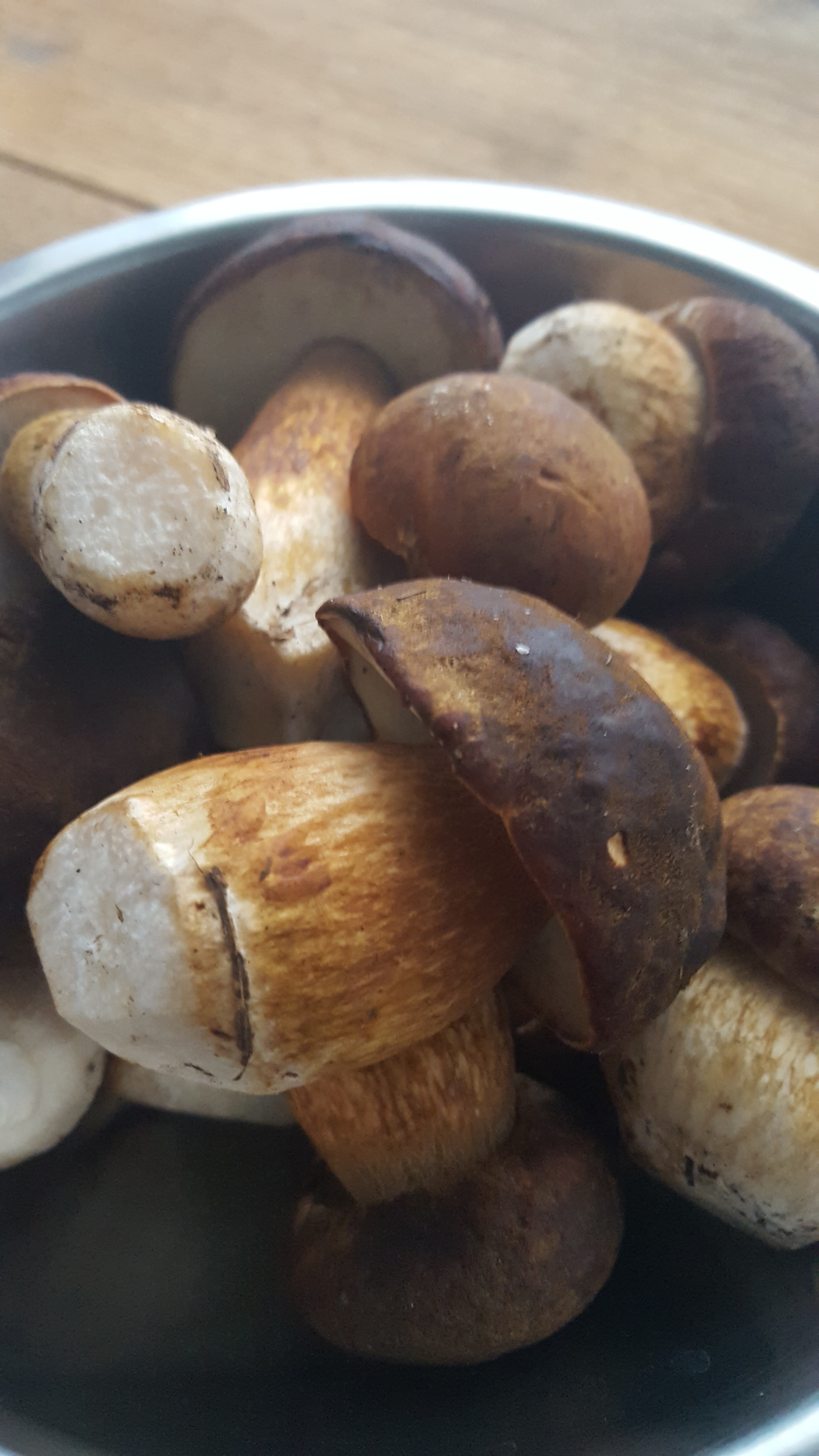 Christmas Tree Farm brown boletes