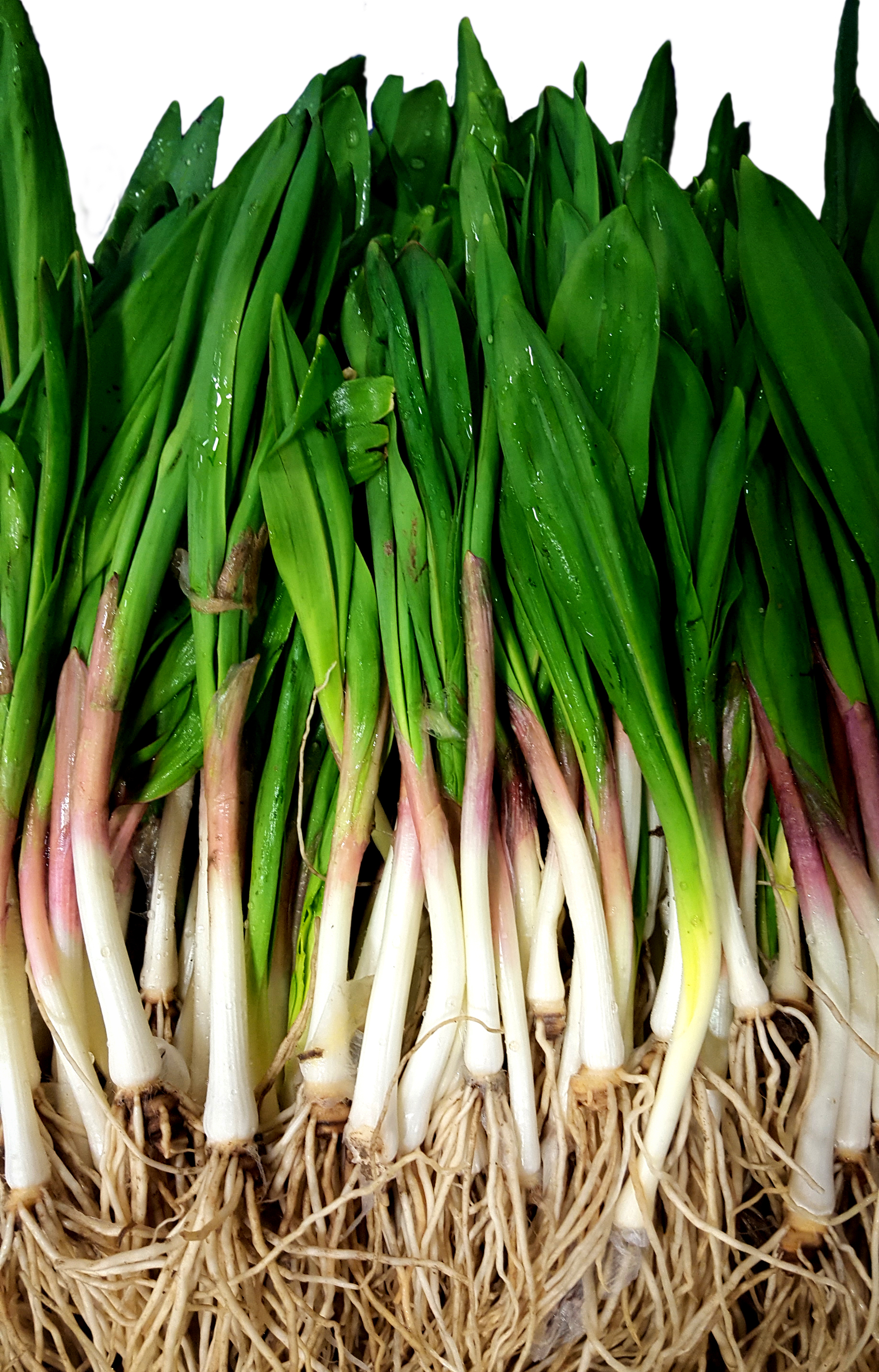 Ramps, Glorious Ramps!