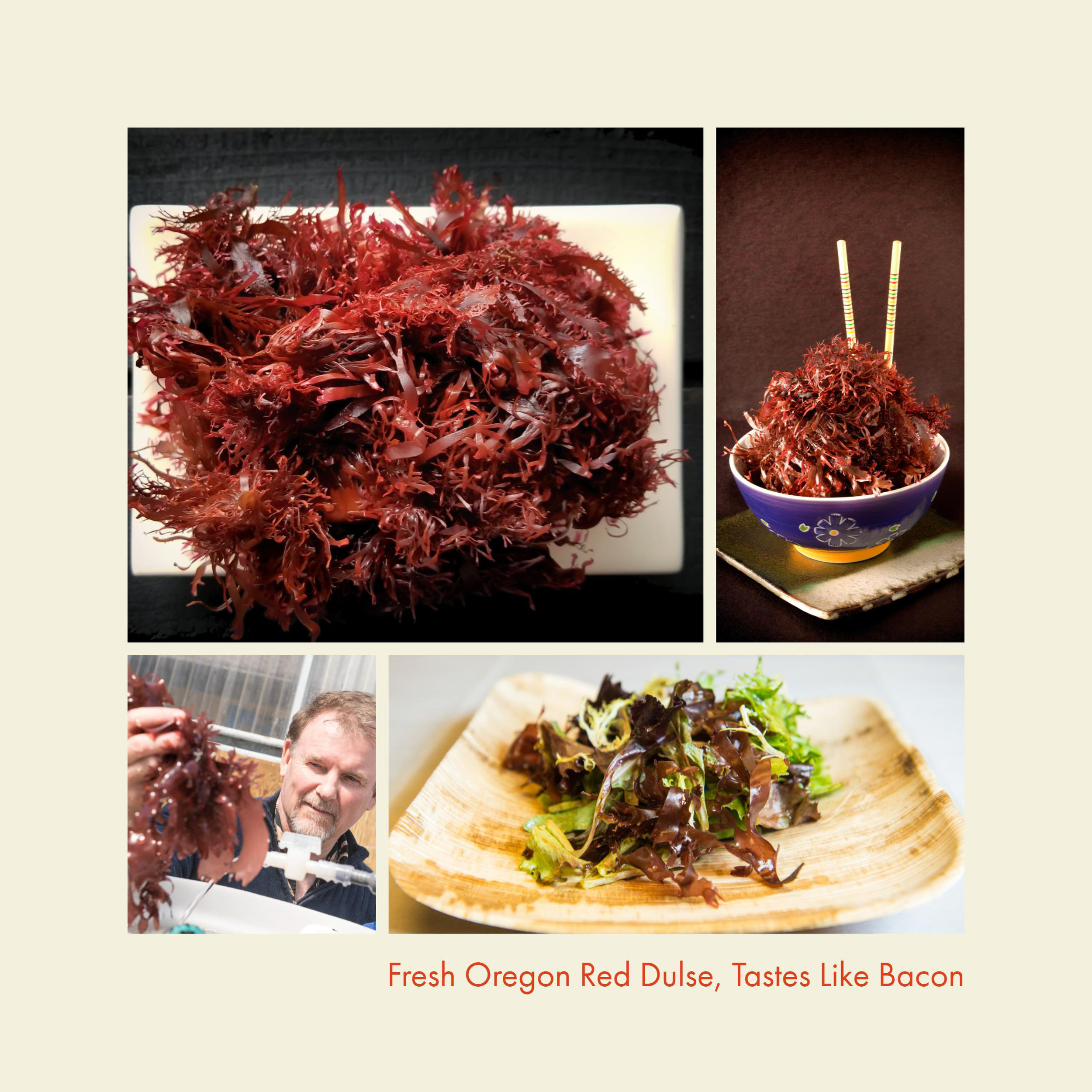 Oregon Red Dulse now available!
