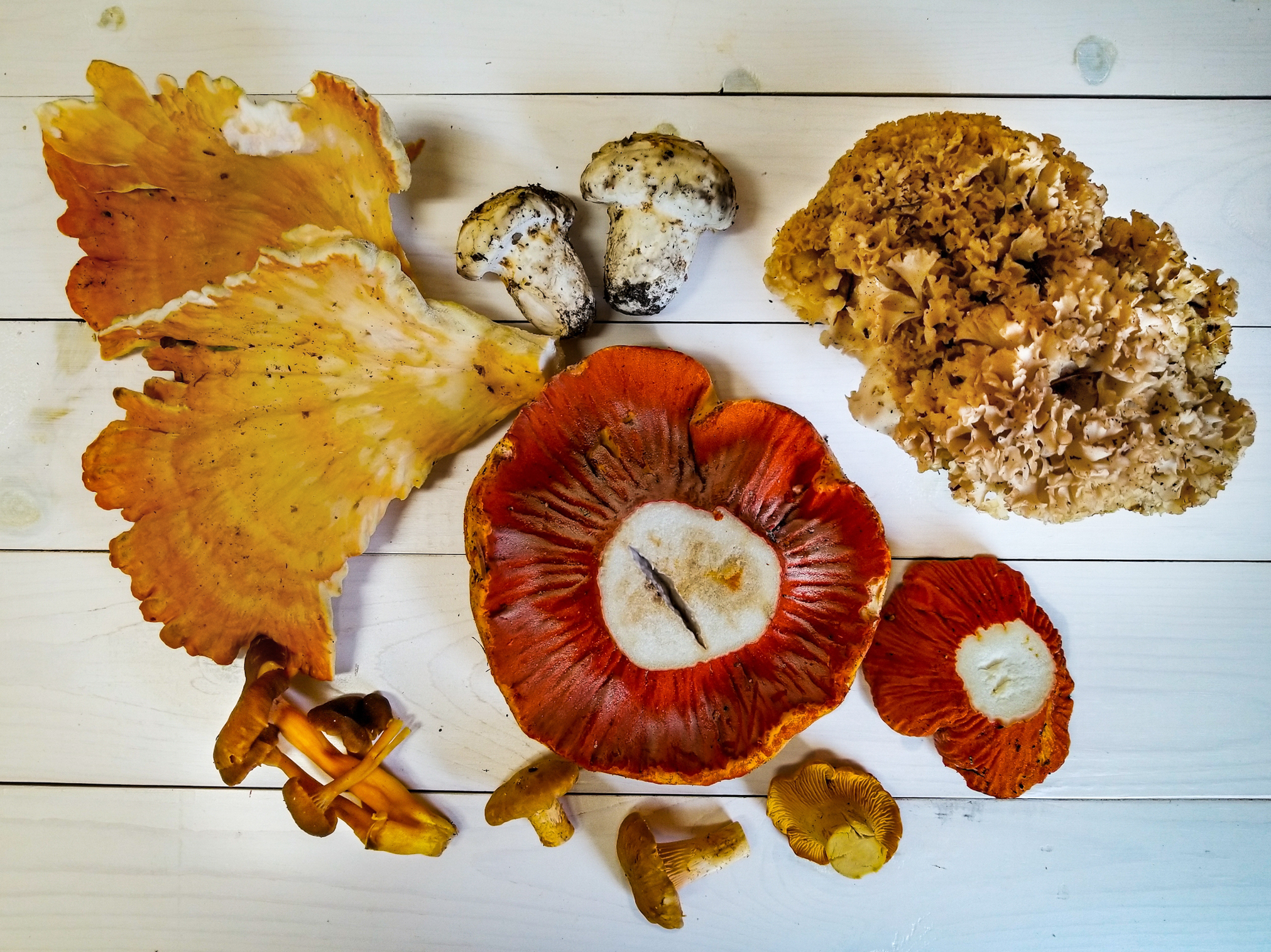Fall Wild Mushrooms