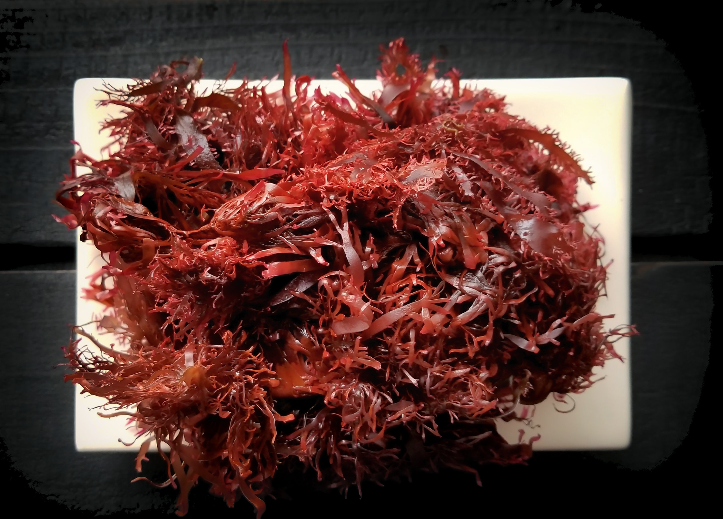 Oregon Red Dulse