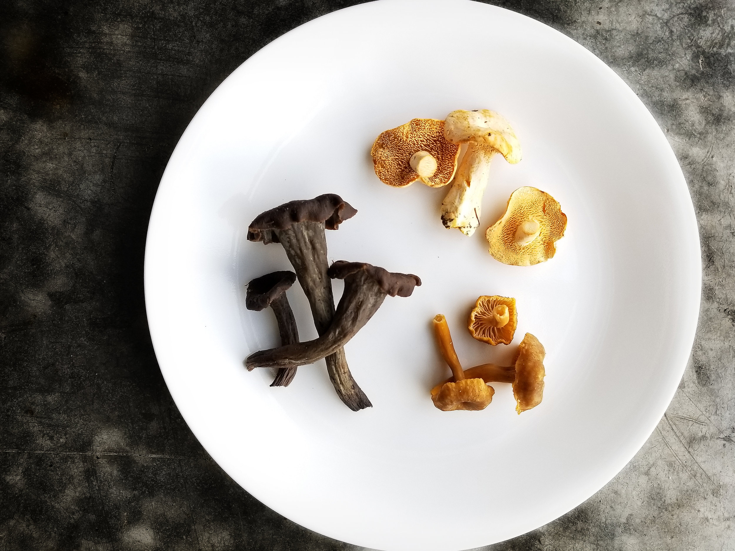 Time for the Winter Trio of Wild Mushrooms
