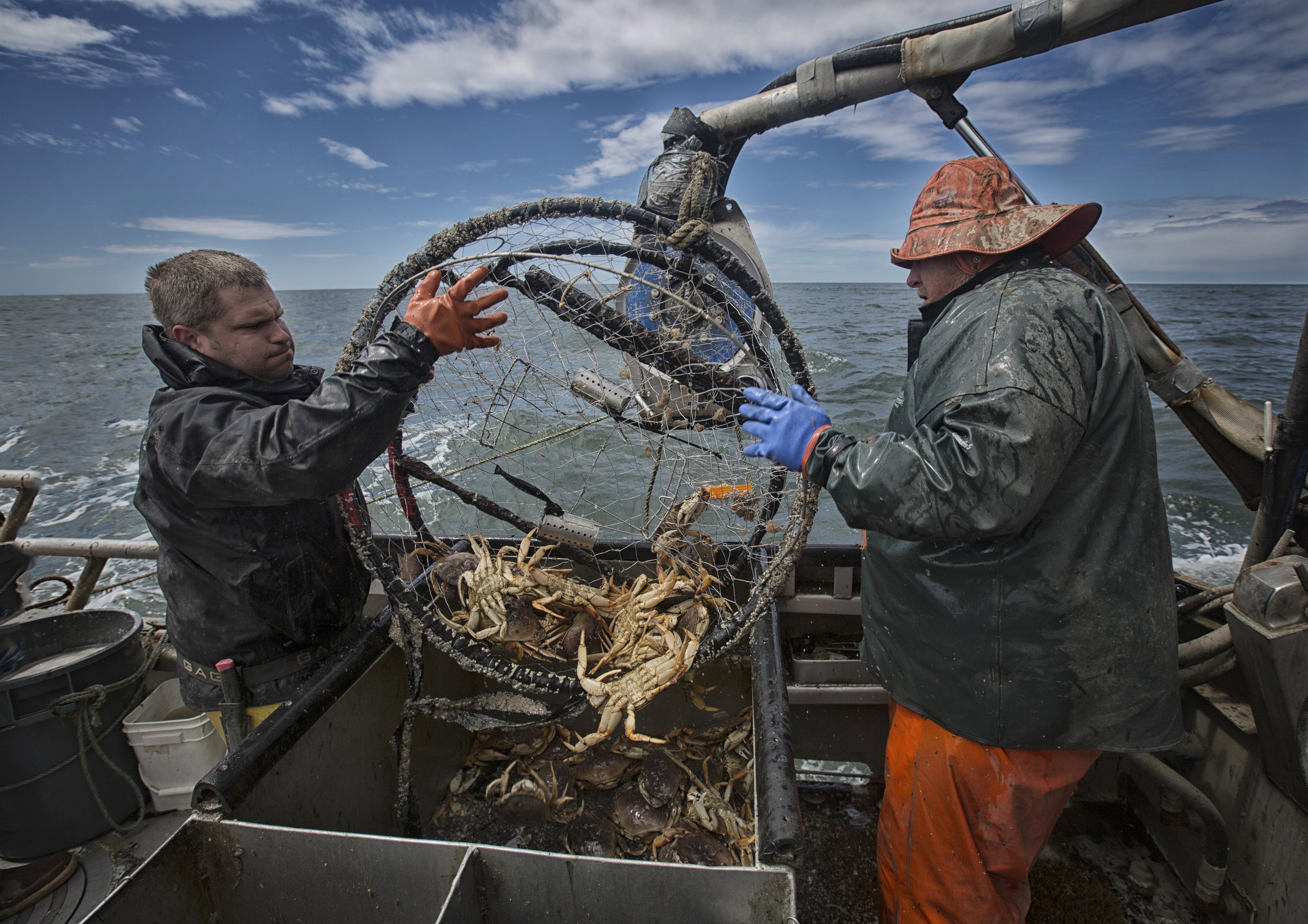 Dungeness Crab Season is Open!