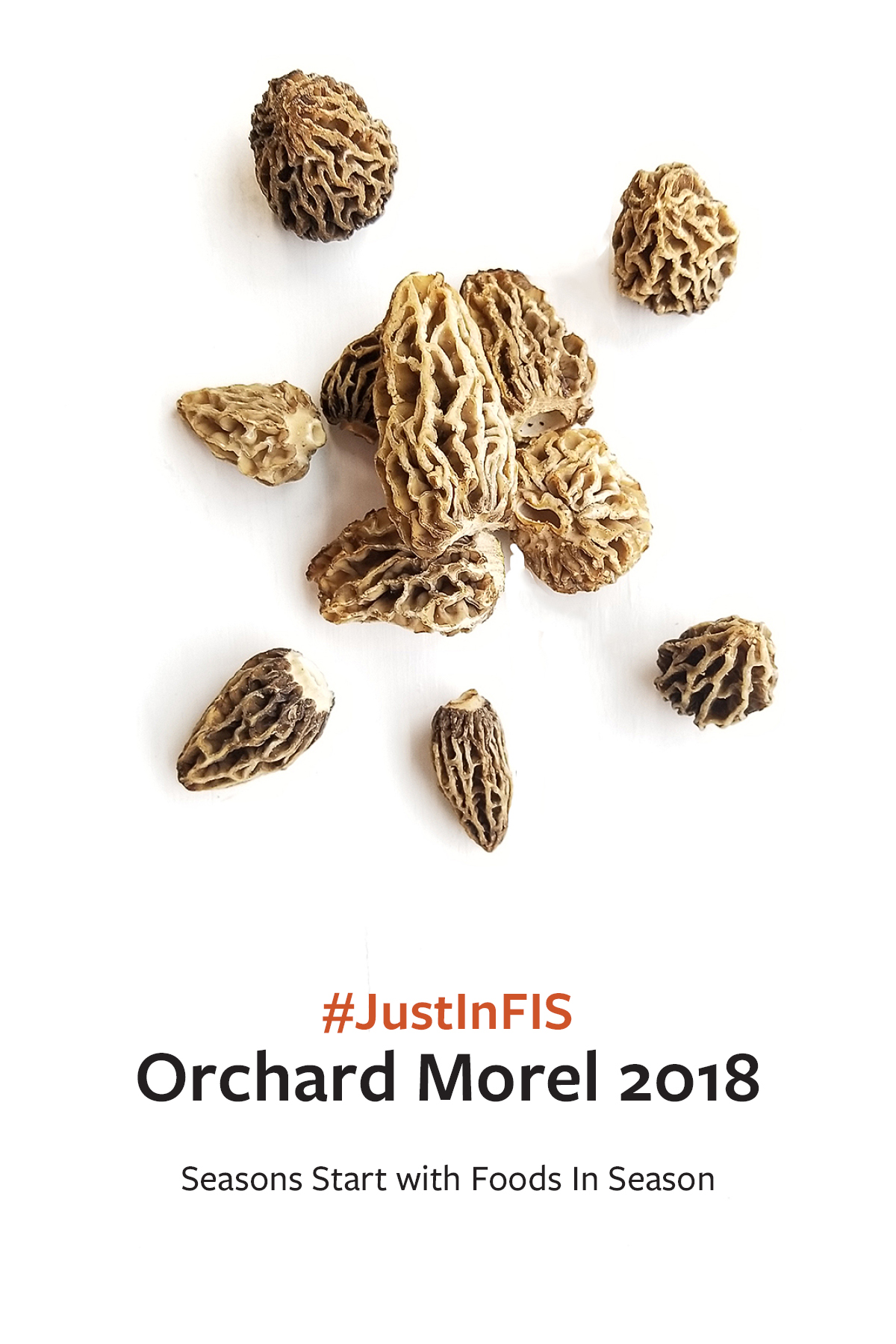 Orchard Morels are here