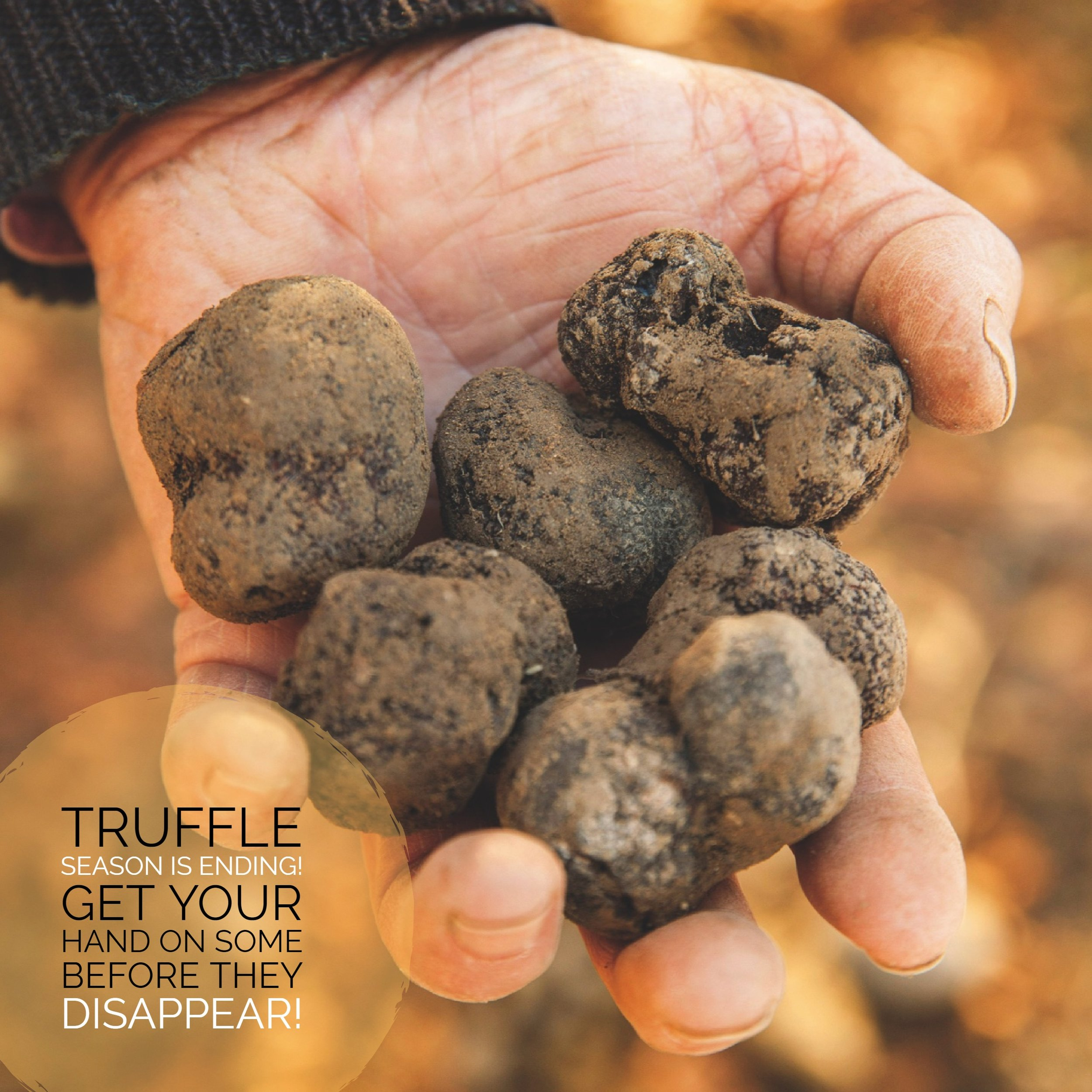 Black Truffle Season is Ending