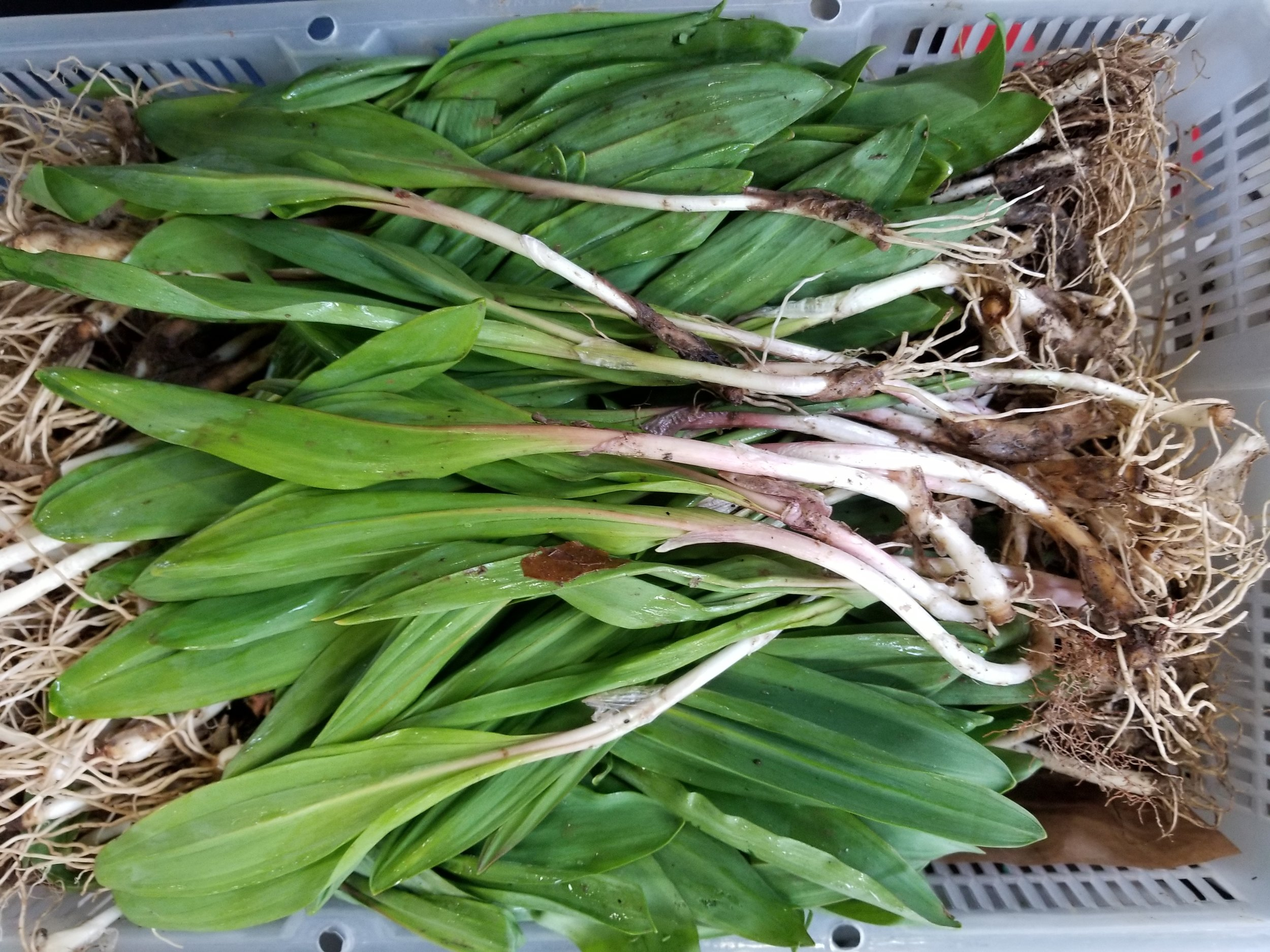 RAMPS are here!