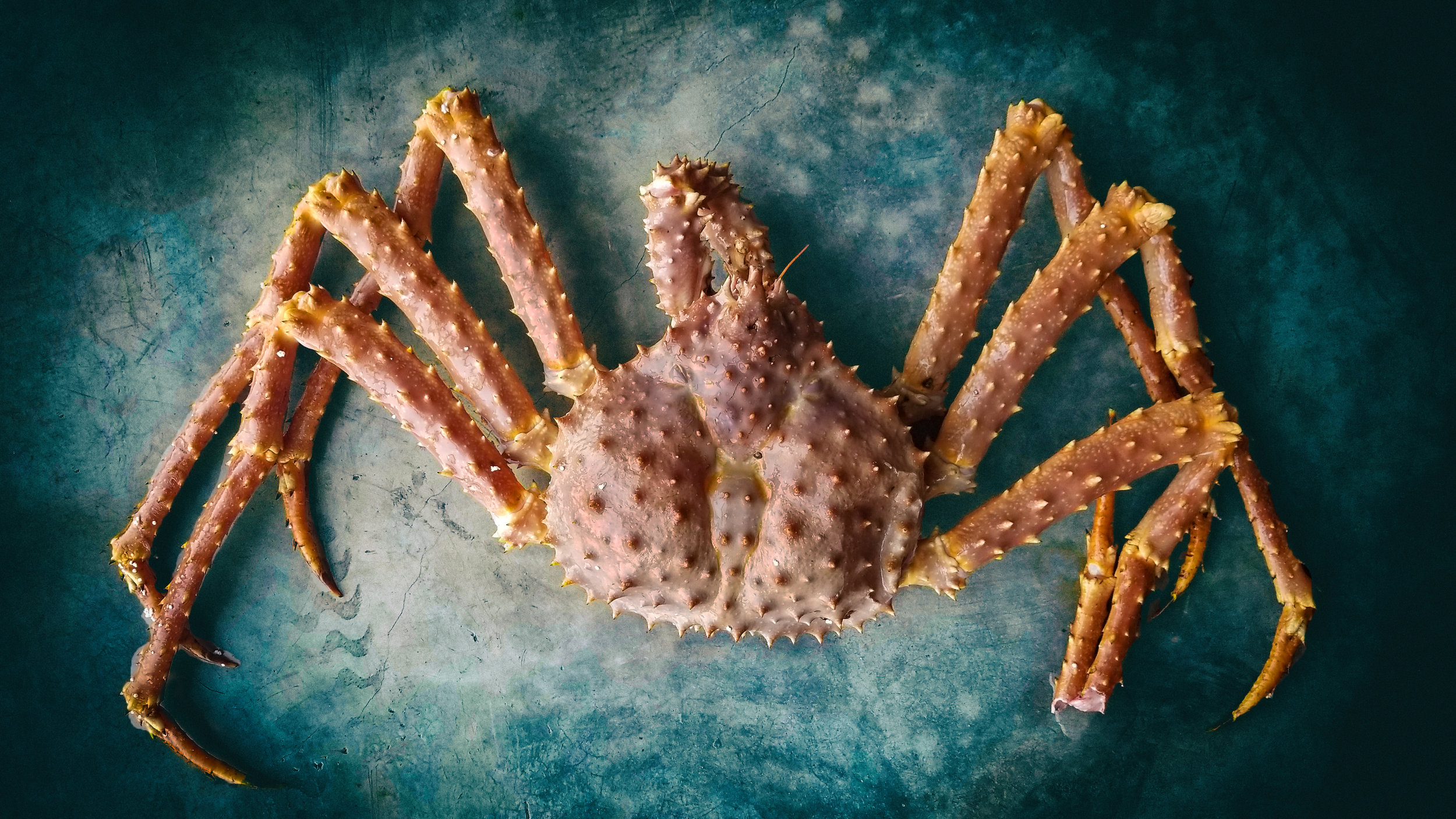 LIVE king crabs straight off the boat from Alaska