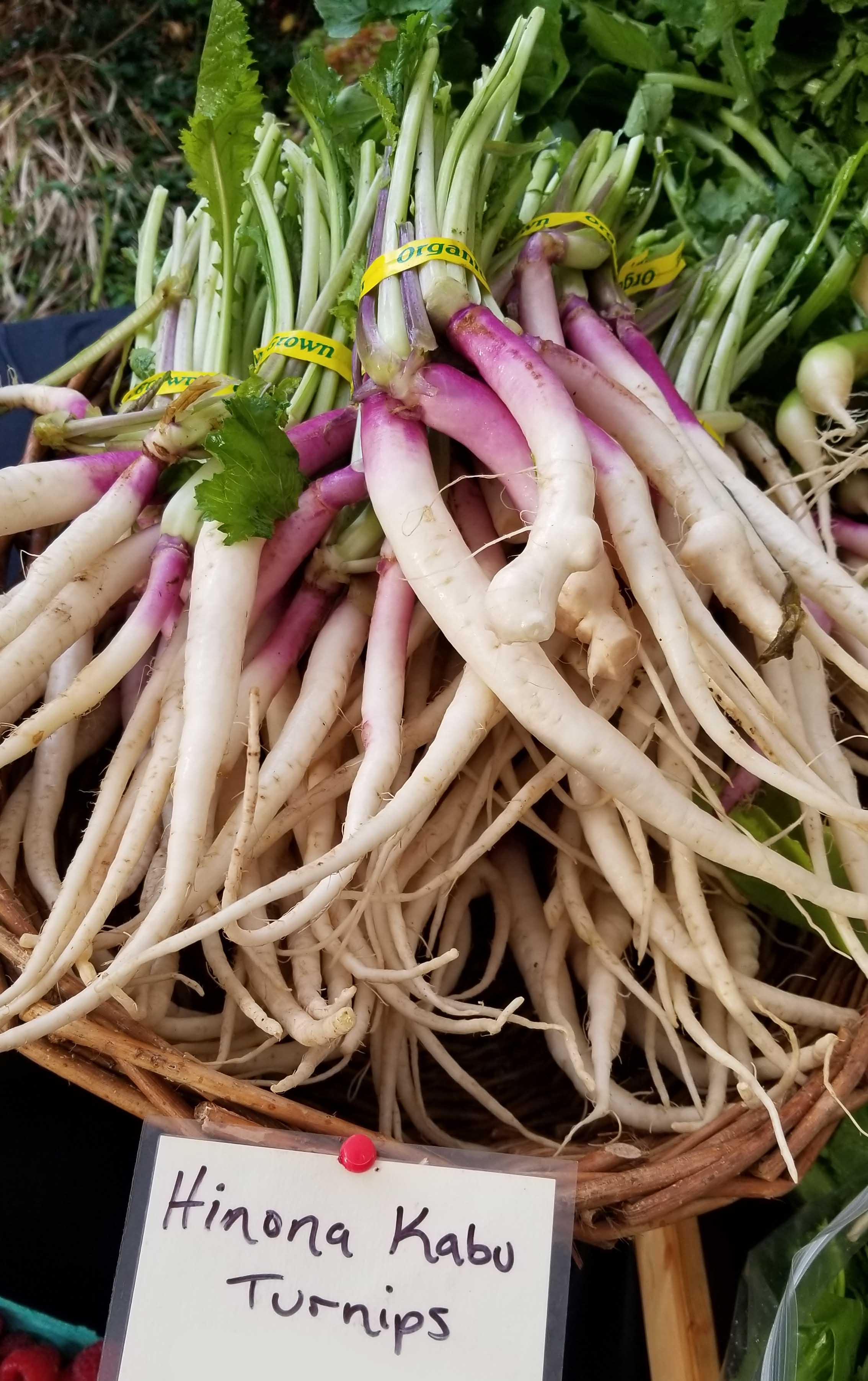Organic grown hinona kabu turnips