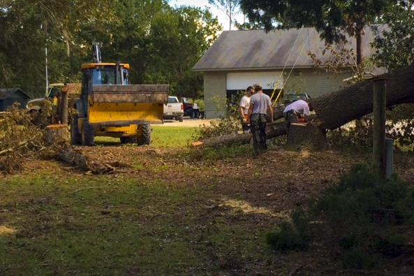Crews  work on cutting up a large oak tree on the grounds of the Webb Wildlife Center.