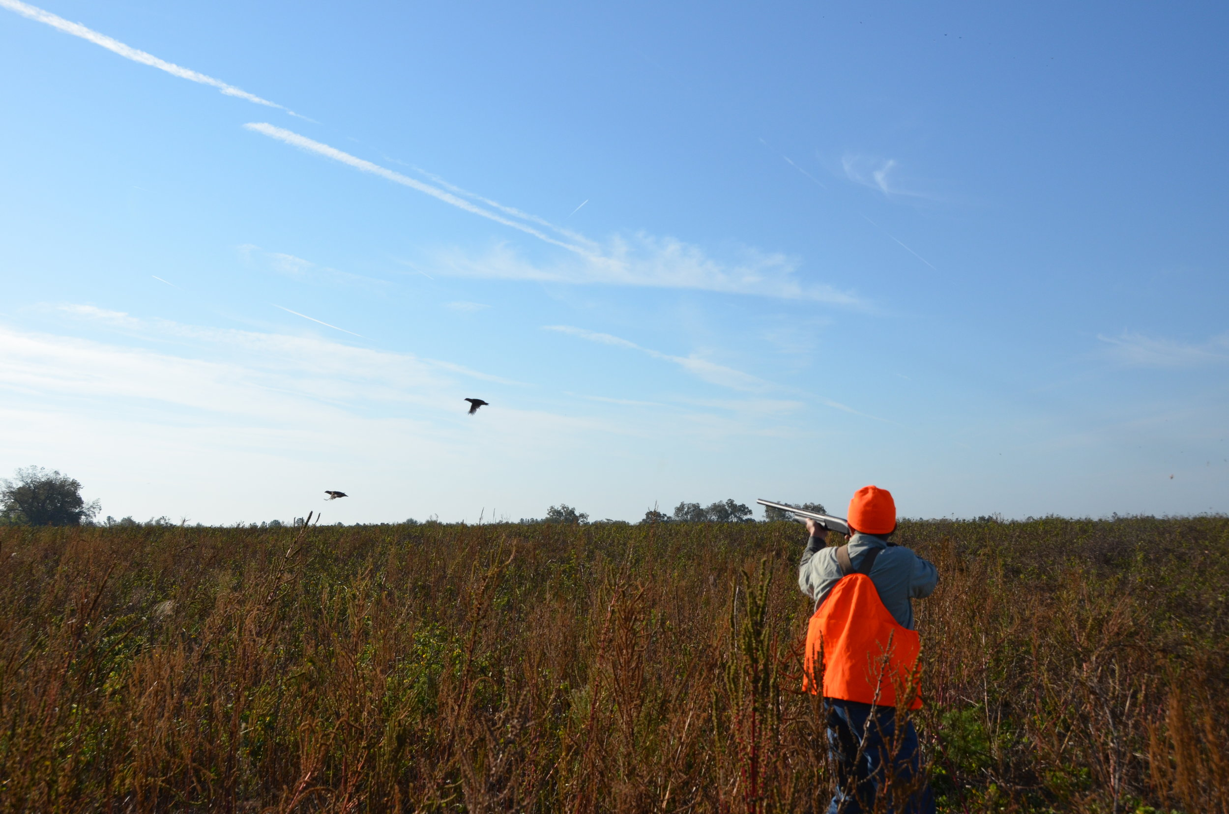 Plenty of shooting action is what makes shooting preserves such a popular option for aspiring quail hunters.