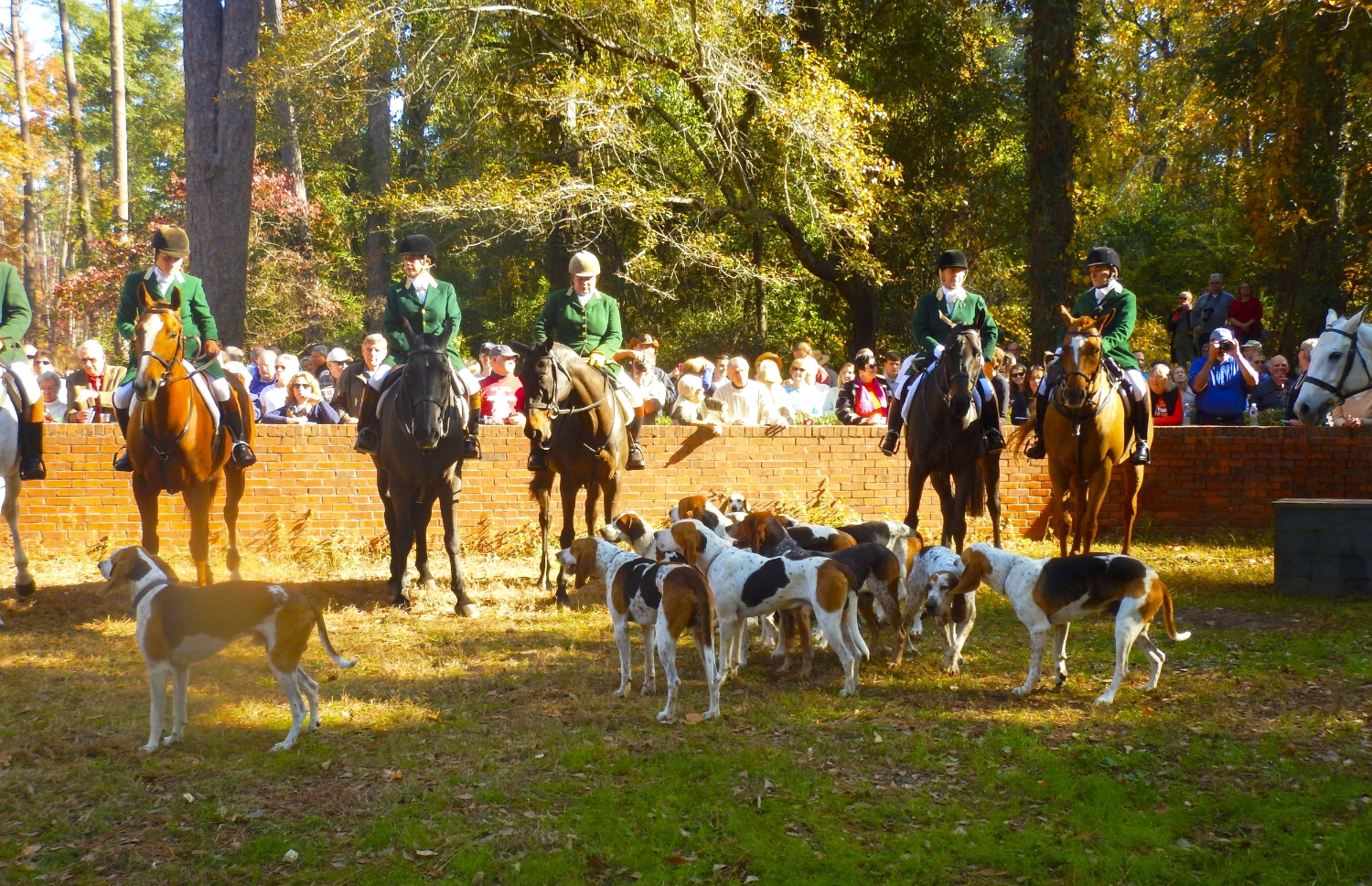 """Green-jacketed staff members of the Aiken Hounds await the beginning of the """"Blessing of the Hounds,"""" a Thanksgiving Day morning tradition for the 102-year-old club."""