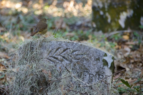 A Colonial-era family graveyard bears witness to the property's more recent past. [All photos by David Lucas, SCDNR]
