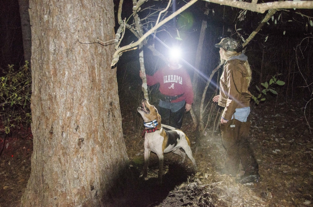 Judge Reba Hughes (right) and Junior Division 3rd place finisher Mason Dexter look carefully to locate a raccoon treed by hounds deep in a bottomland swamp.