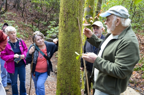 Galax or Oconee bell?  When you habdg out with Dennis Chastain, you learn stuff. Here, Dennis shows the class the subtle differences in the leaves of the two plants.