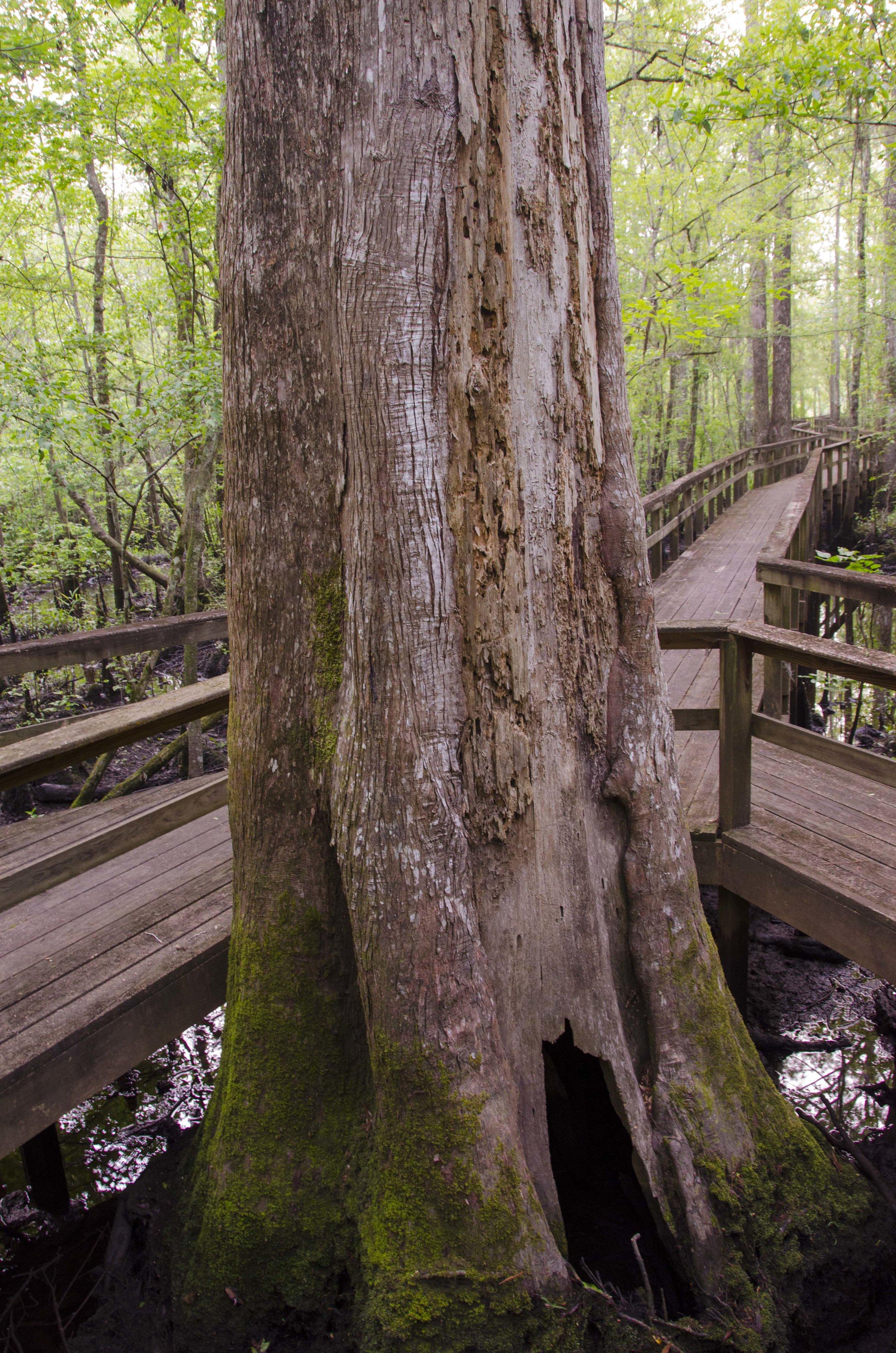 Edisto Trail best for Blog_1.JPG