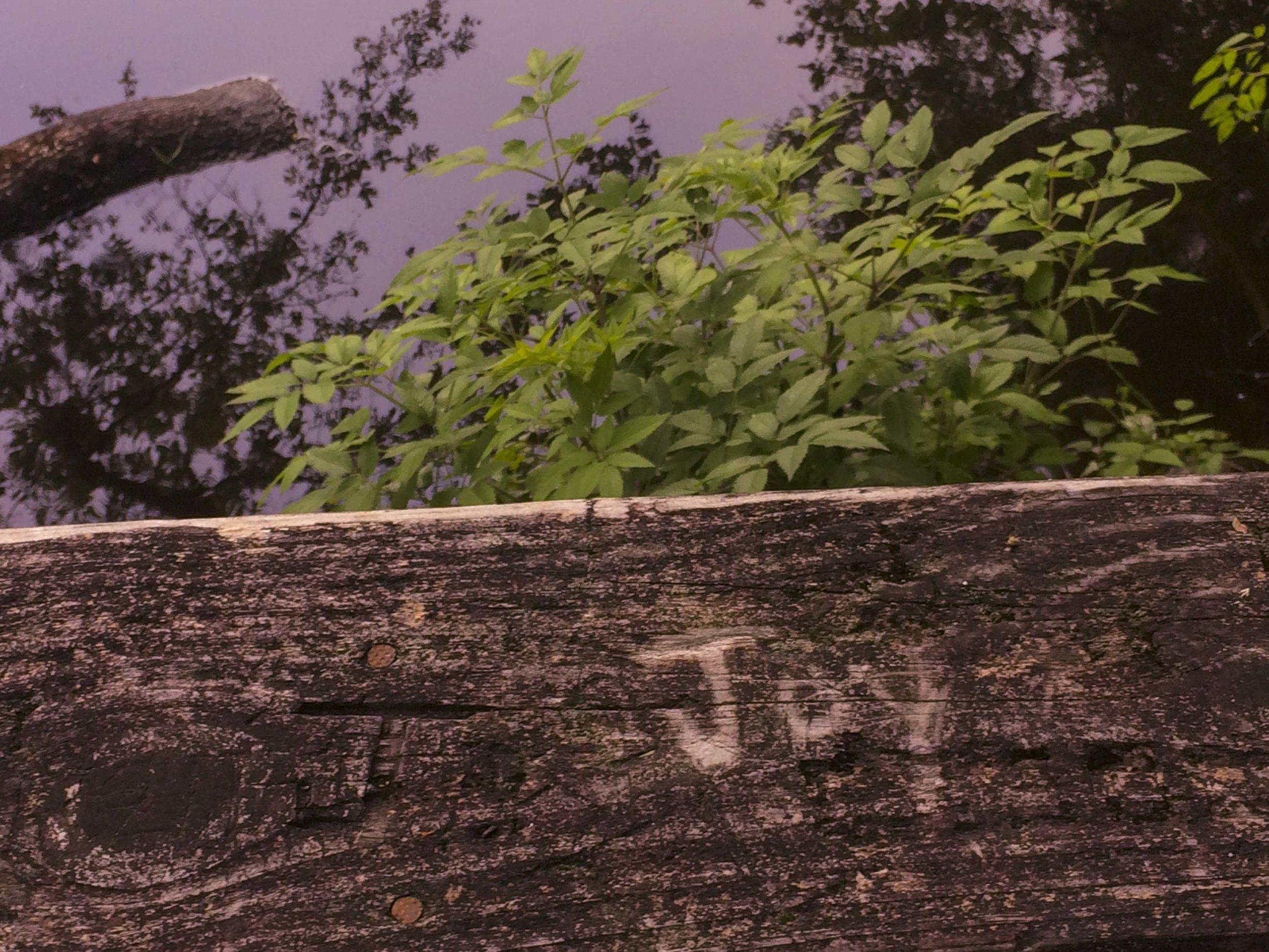 Edisto Trail best for Blog_31.JPG