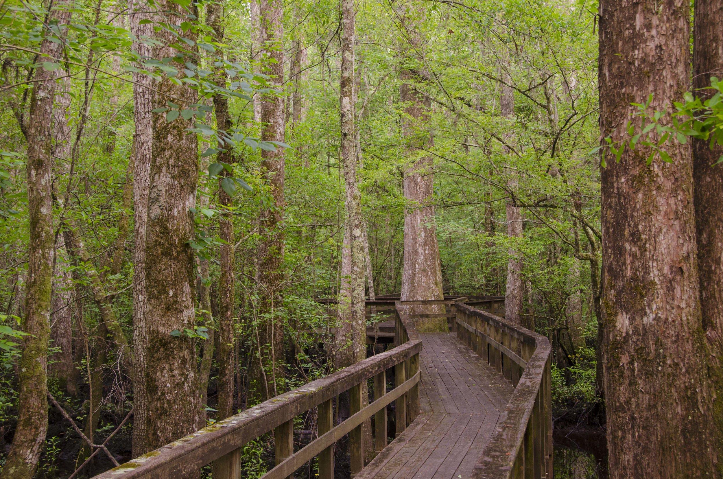 Edisto Trail best for Blog_18.JPG