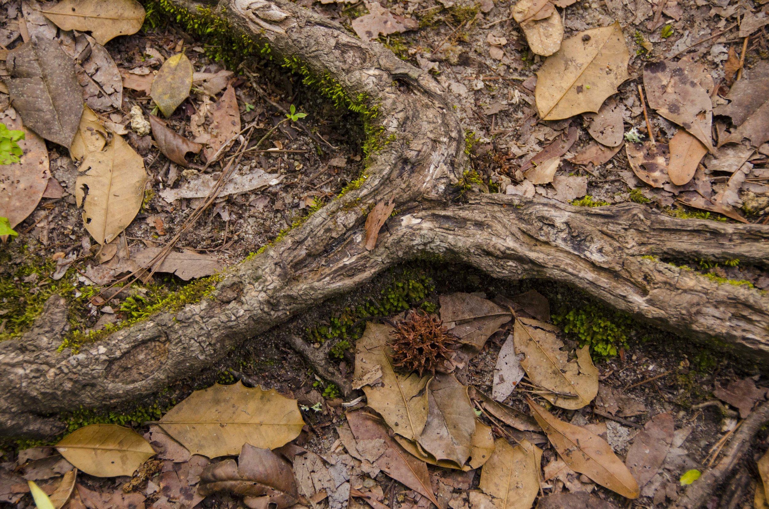 Edisto Trail best for Blog_33.JPG