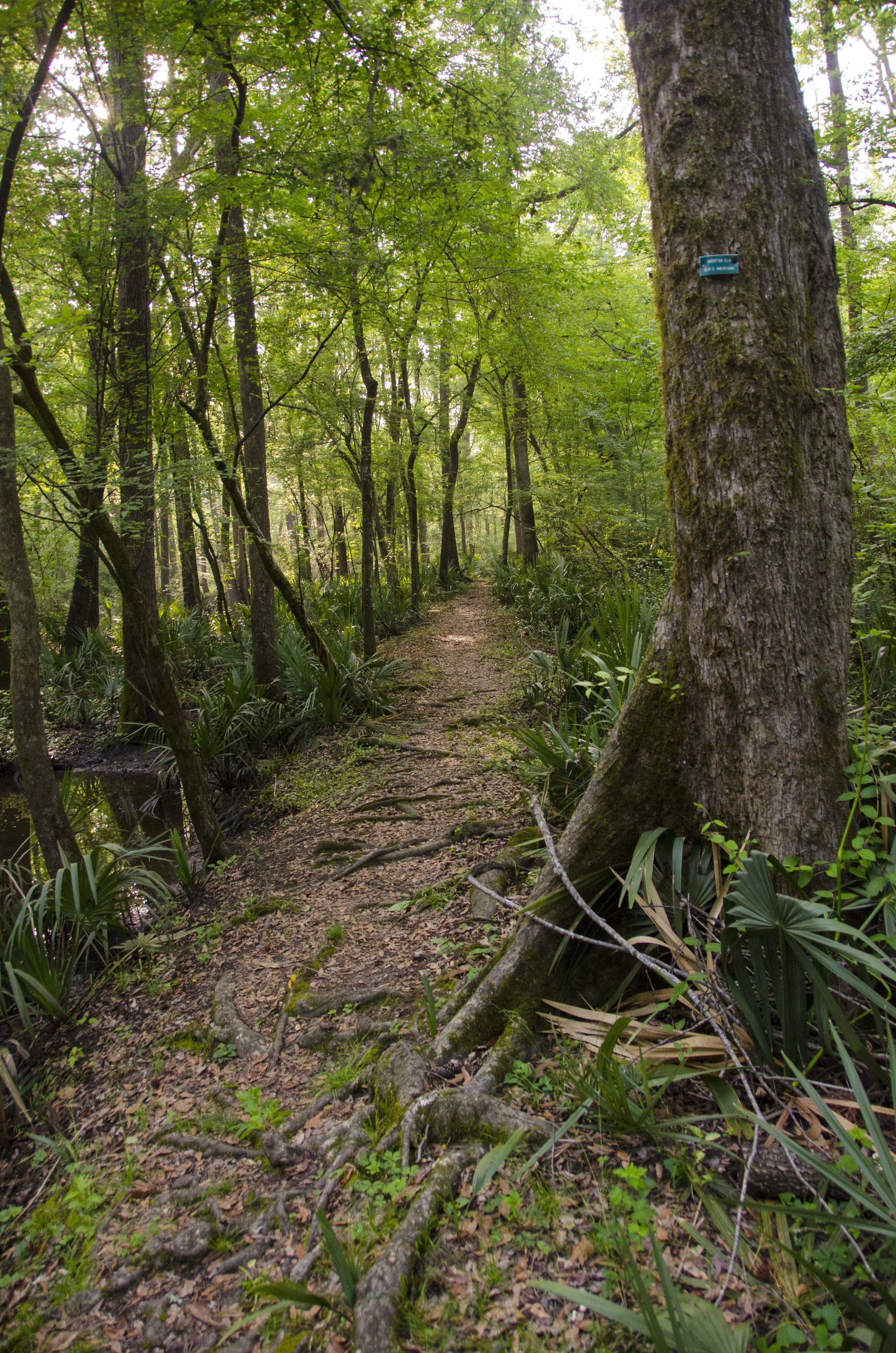Edisto Trail best for Blog_32.JPG