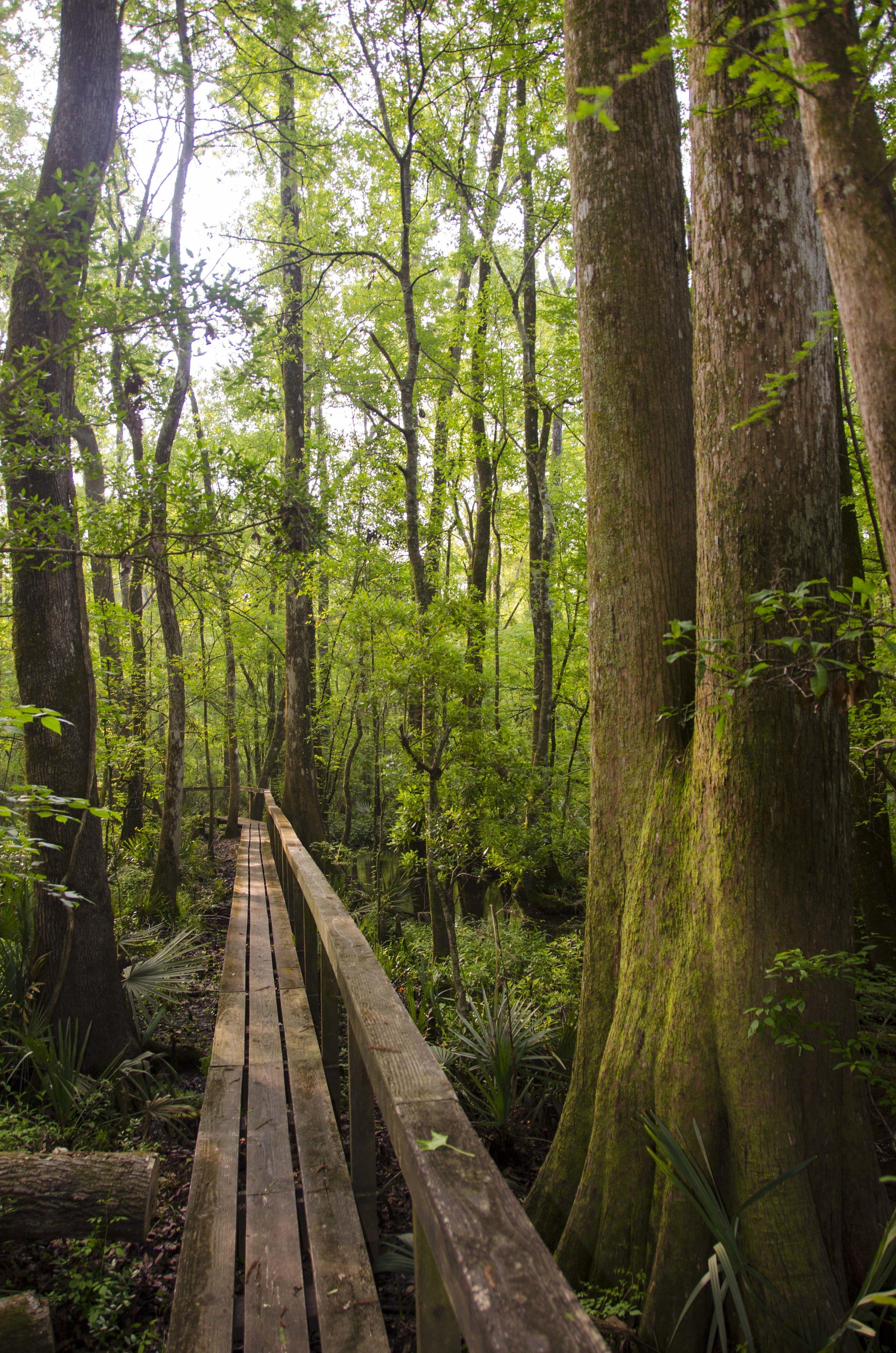 Edisto Trail best for Blog_34.JPG