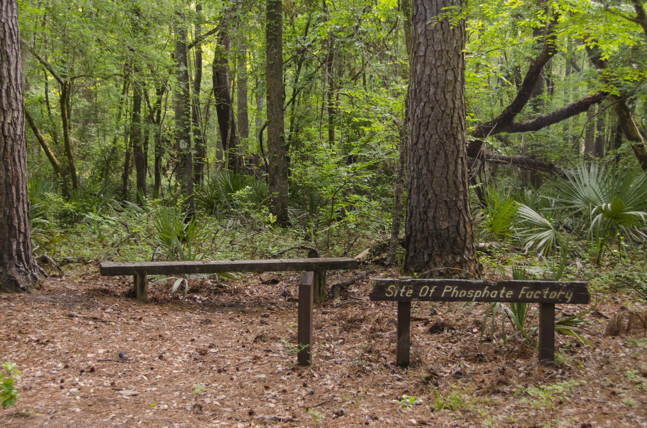 Edisto Trail best for Blog_35.JPG