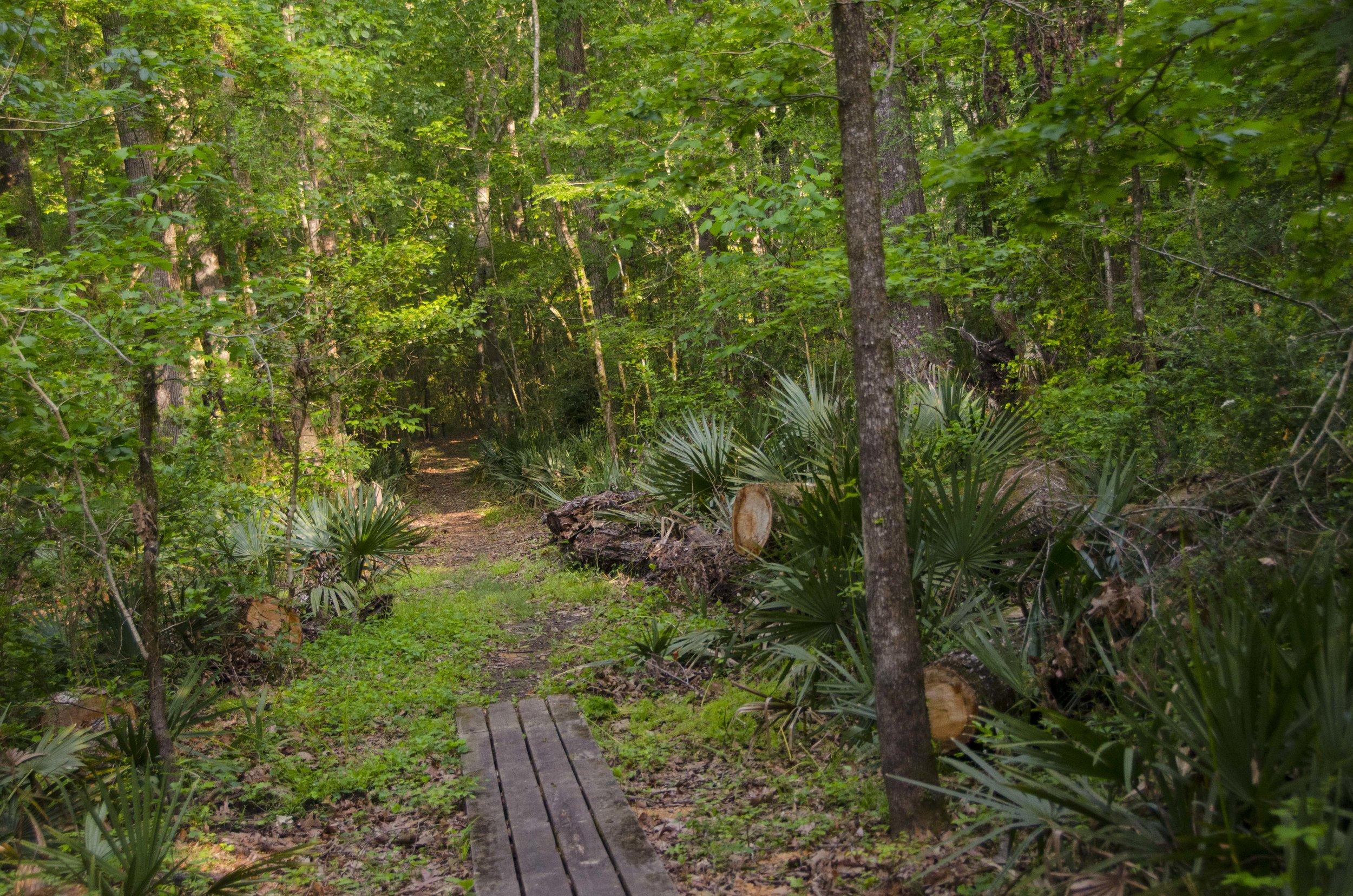 Edisto Trail best for Blog_40.JPG