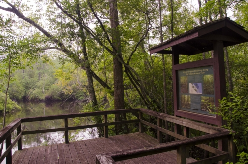 Stop and stay awhile at the boardwalks end and listen to the waters of the tea-stained Edisto River go whispering by on their final run to the sea from the Fall Line.