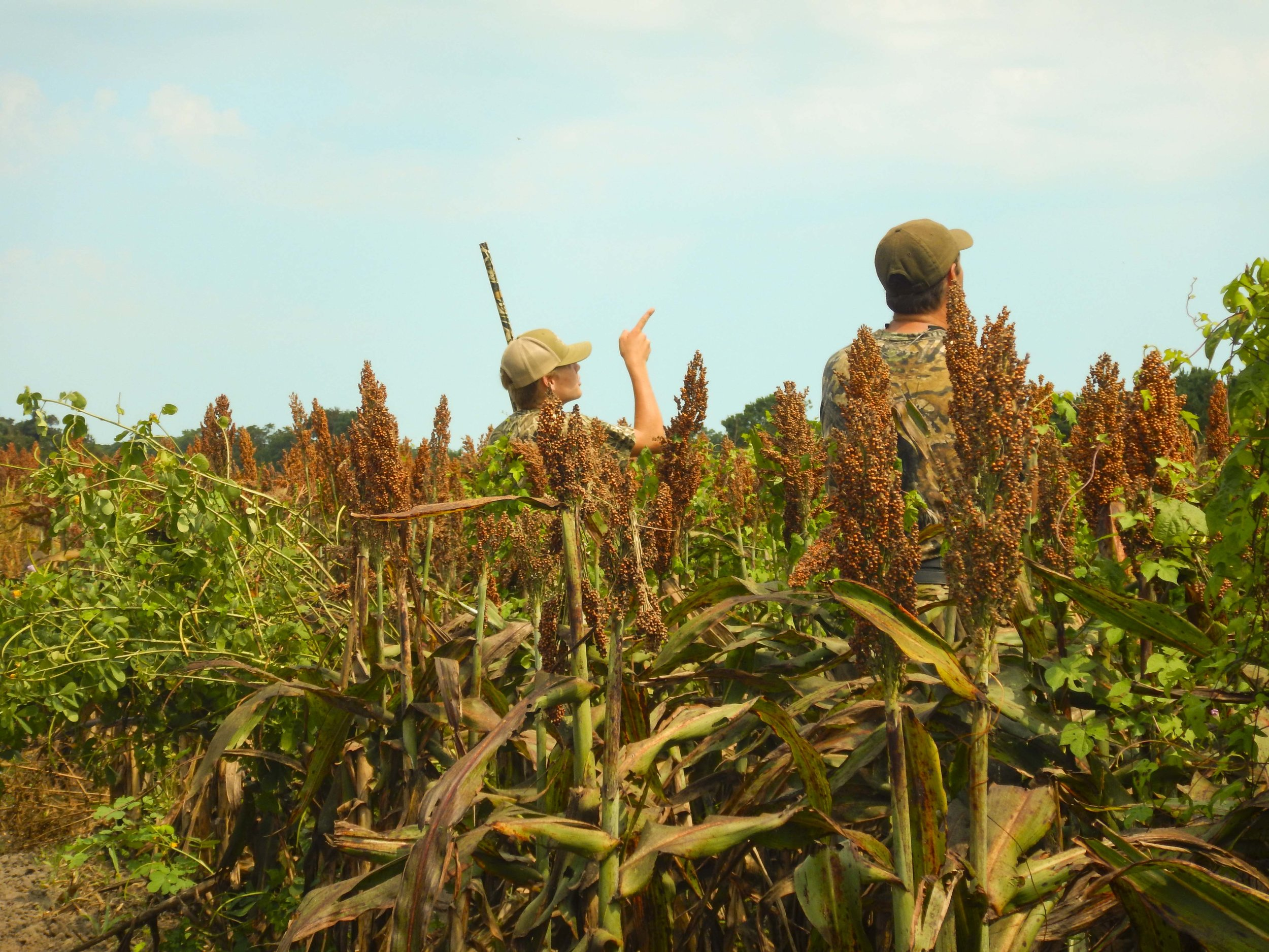 Participants at a special Youth-only dove hunt at the SCDNR's Botany Bay WMA & Heritage Preserve scan the sky looking for mourning doves. photo by David Lucas