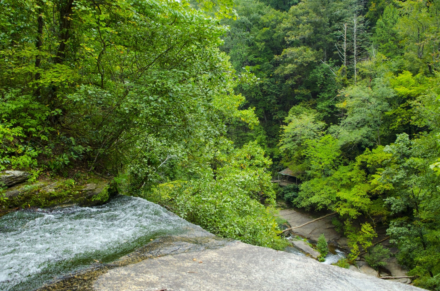 From the top of Reedy Cove Falls you can see the viewing platform at the base of the falls, 75 feet below. SCDNR photo by David Lucas
