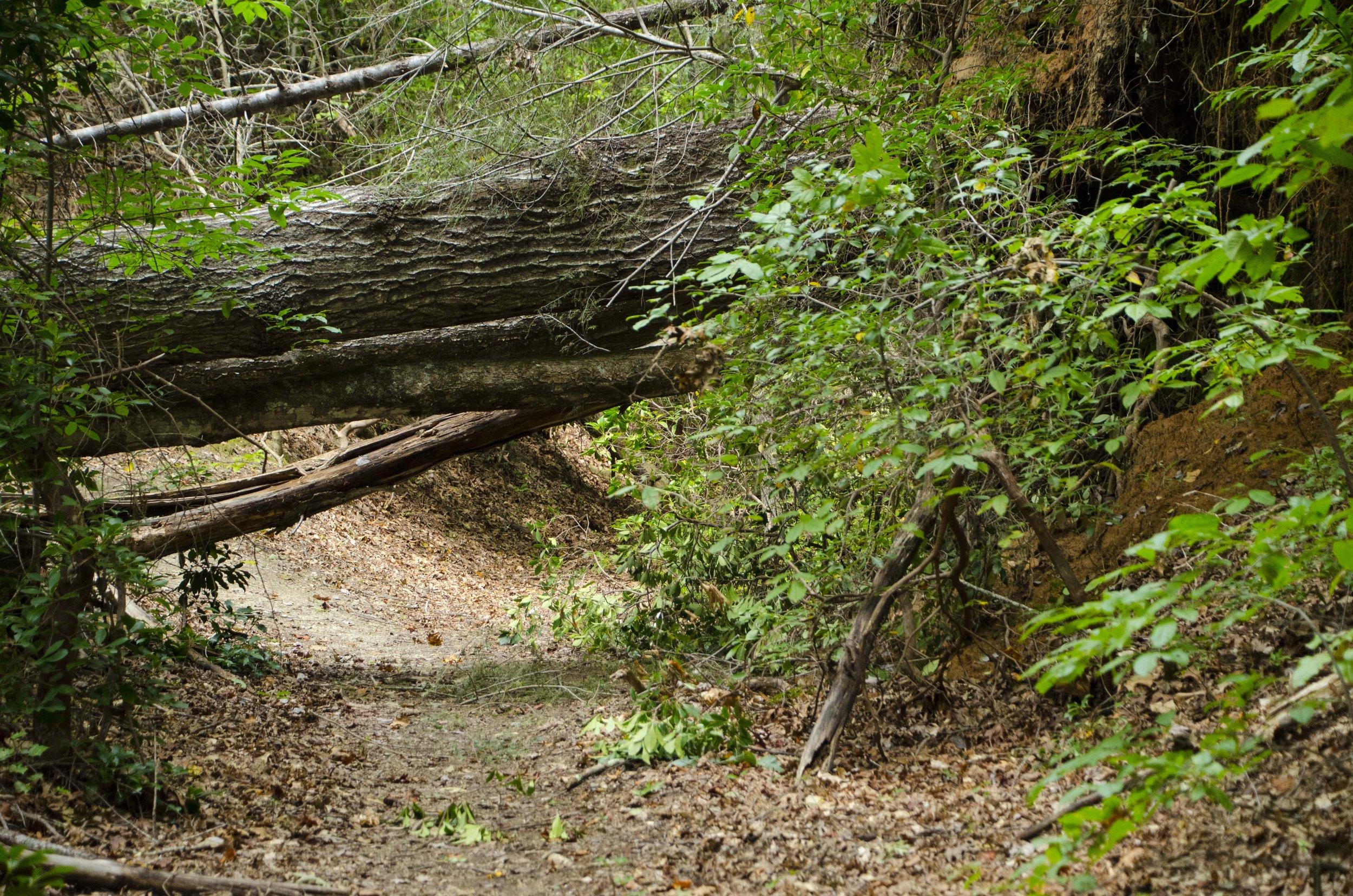 Reedy Cove Falls for Blog by DLucas_2.JPG