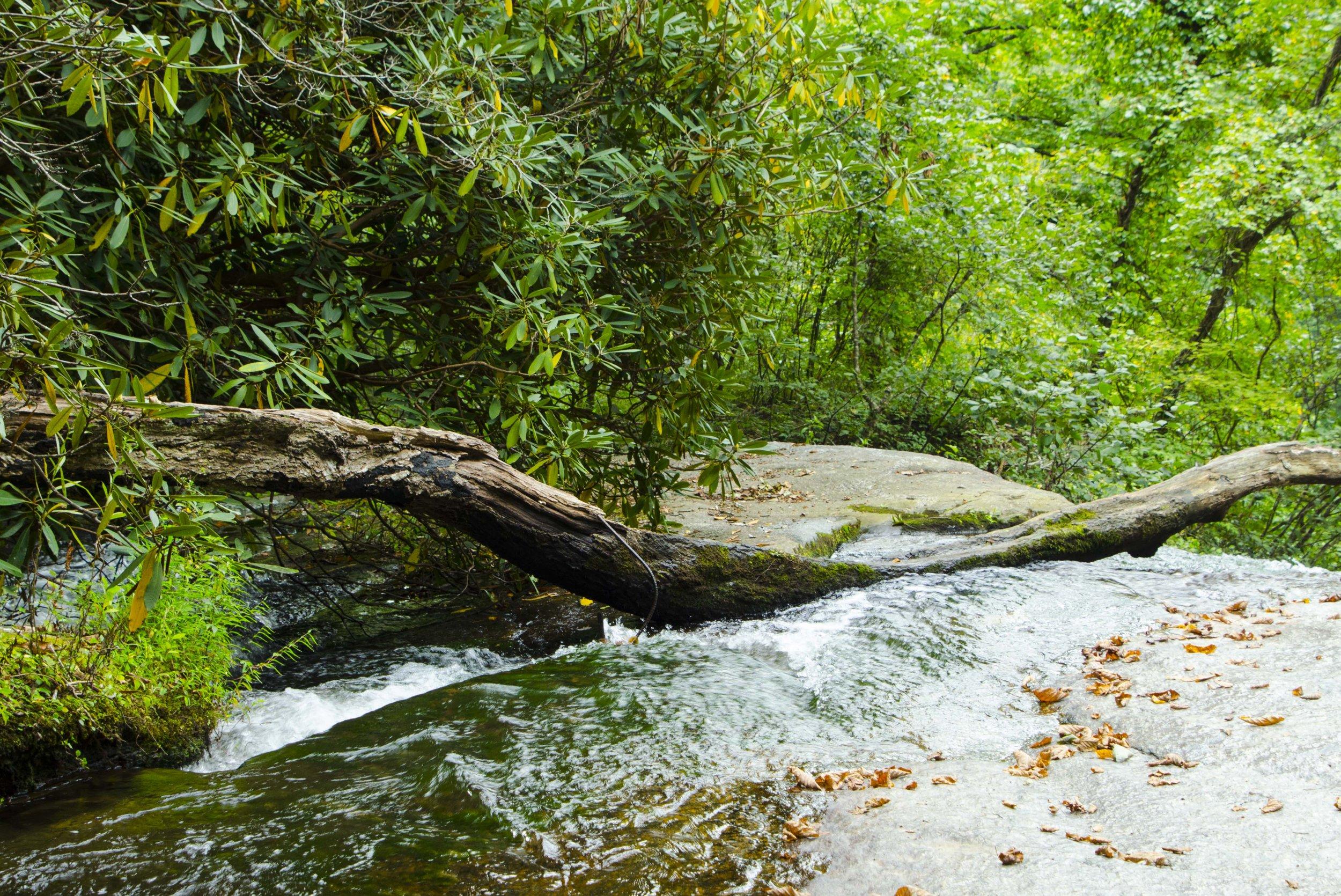 Reedy Cove Falls for Blog by DLucas_9.JPG