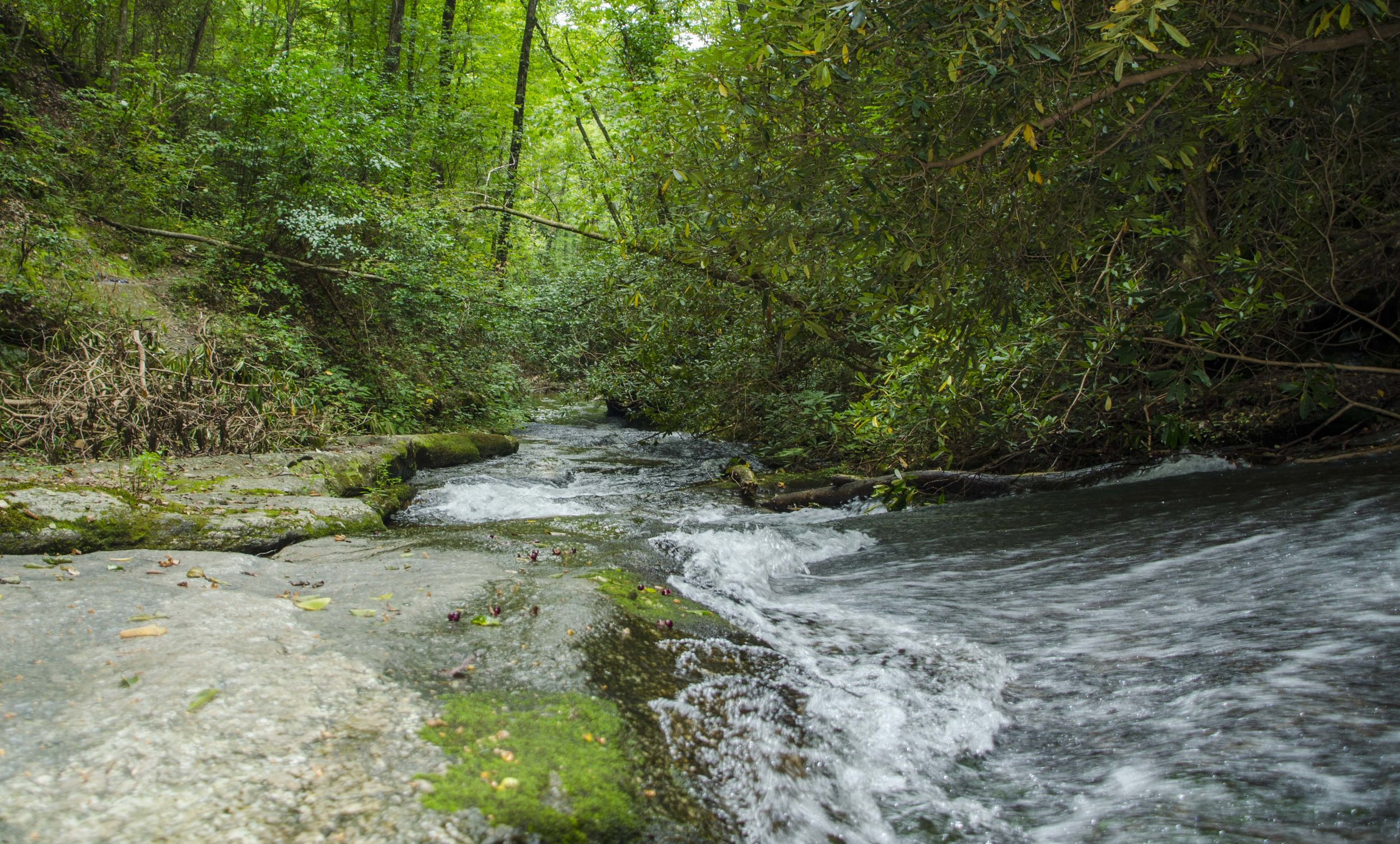 Reedy Cove Falls for Blog by DLucas_13.JPG