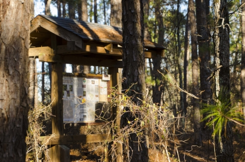 Start amongst the pines, but you'll quickly find yourself in hardwoods on steep slopes.(SCDNR photo by D. Lucas)