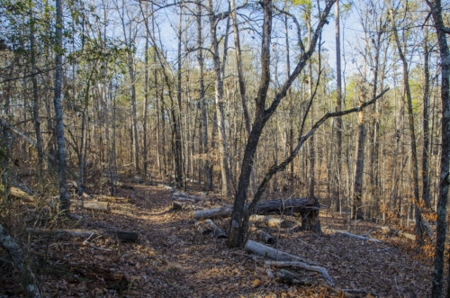 The trail is narrowm but relatively well-marked.(SCDNR photo by D. Lucas)