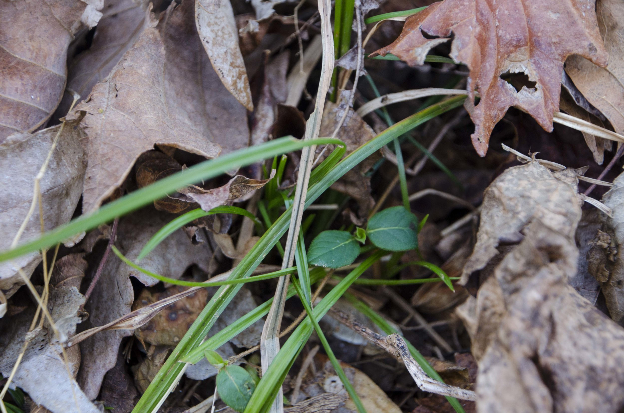 A few hints of spring were visible along the trail.(SCDNR photo by D. Lucas)