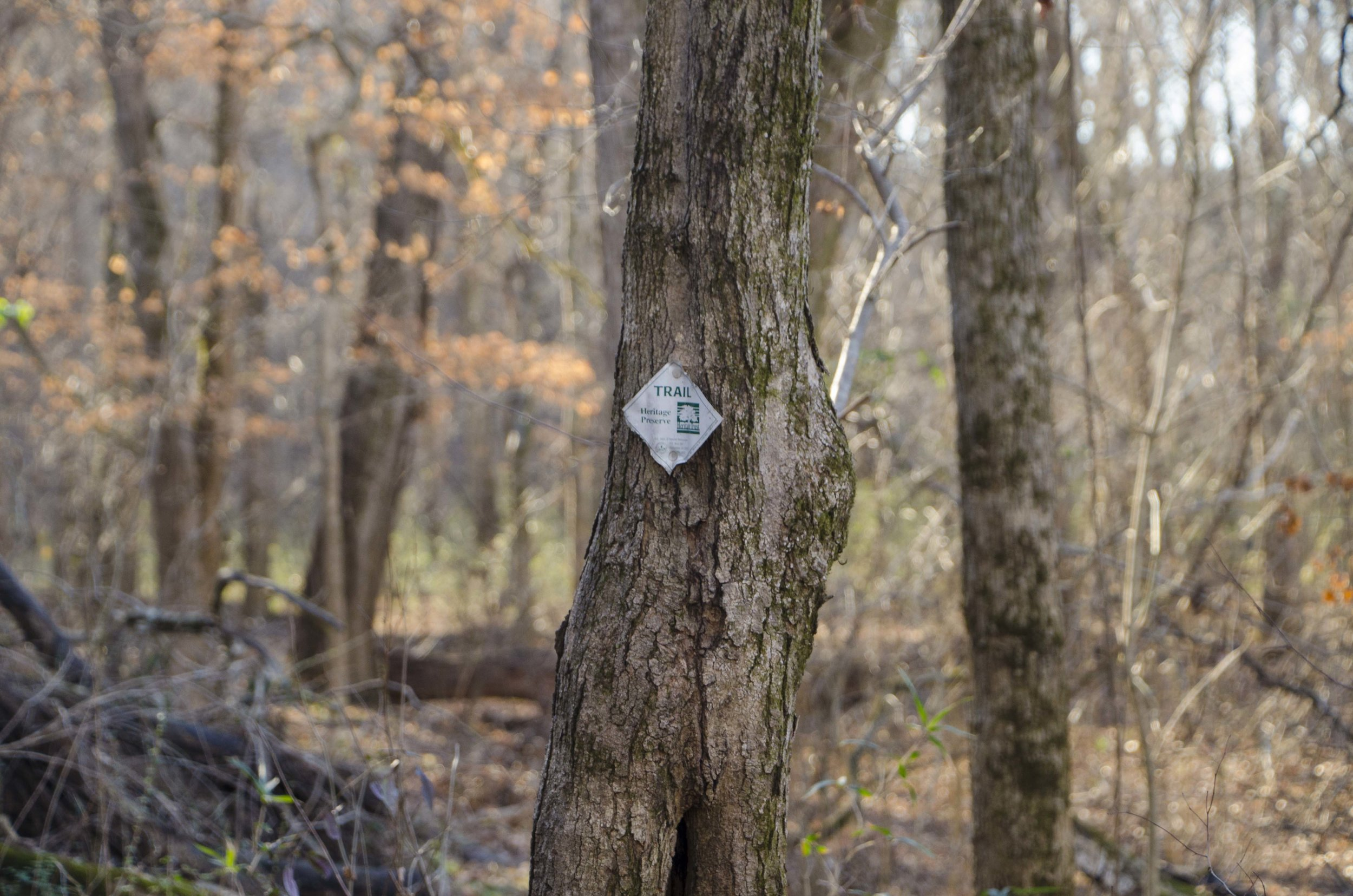 It's not long before the trail begins to get steep.(SCDNR photo by D. Lucas)