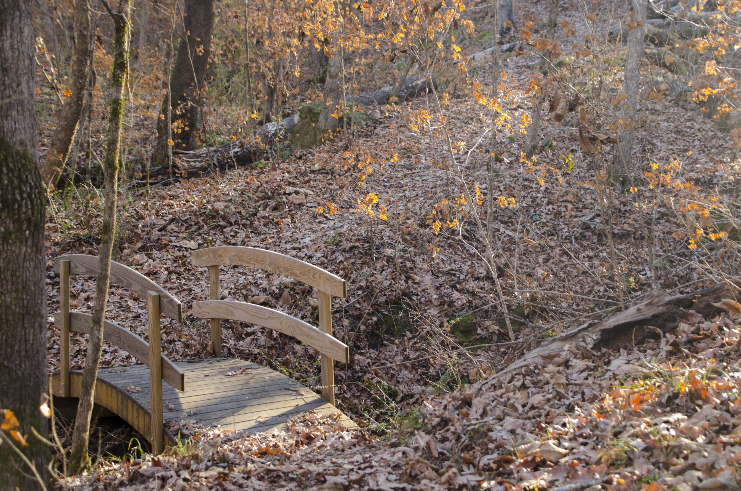 Wooden bridges cross small feeder creeks at several spots along the trail.(SCDNR photo by D. Lucas)