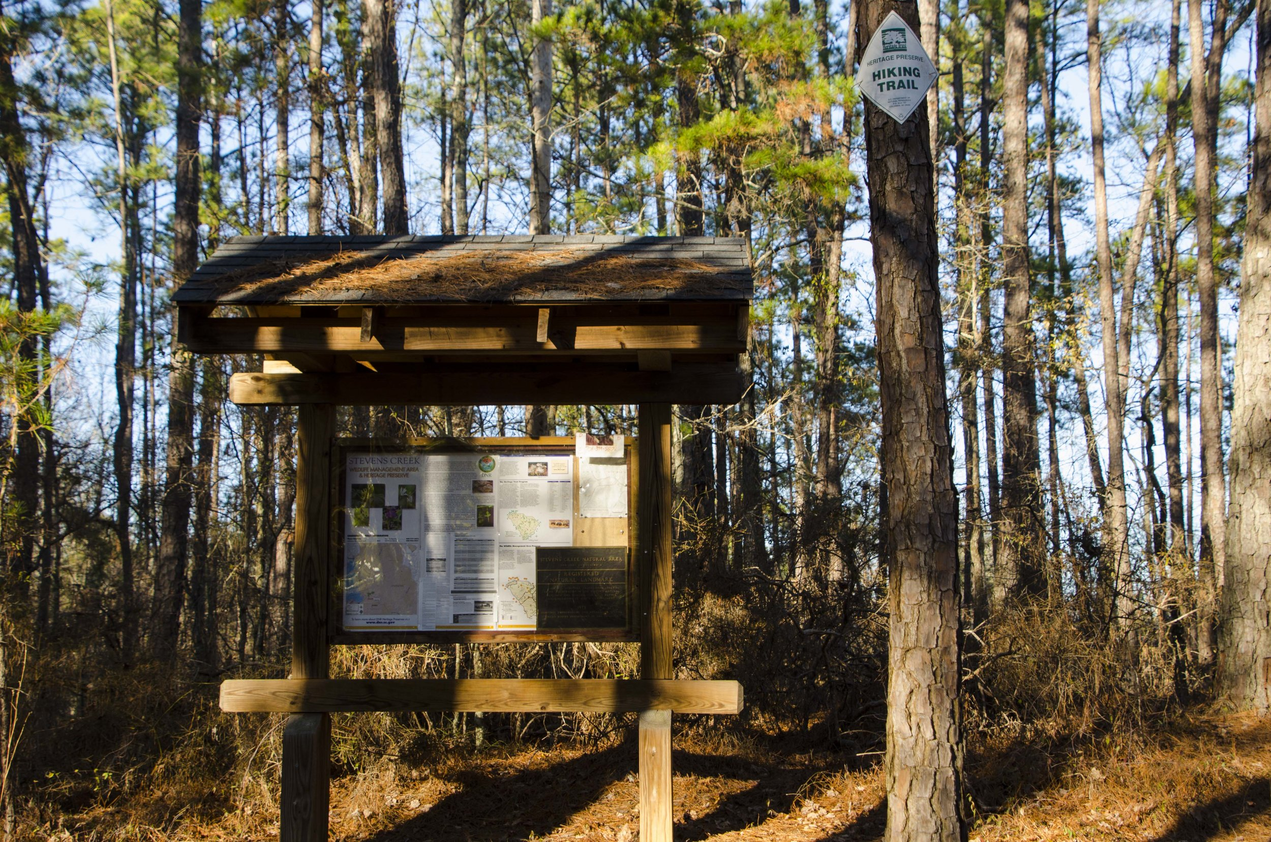 The kiosk at the trailhead is surrounded by a grove of pine trees.SCDNR photo by D. Lucas)
