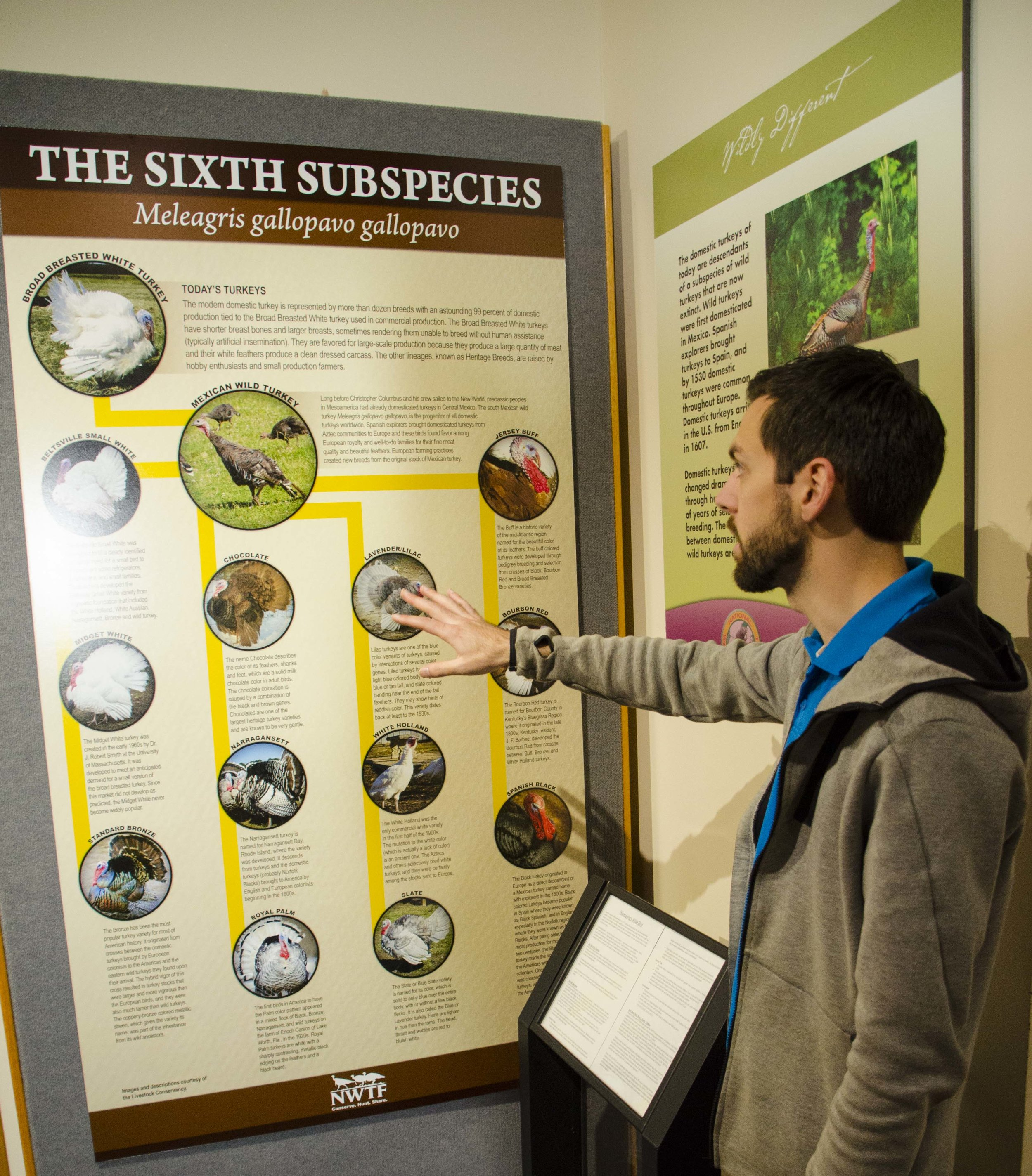If you visit the Winchester Museum with a group, there's a good chance you'll run into NWTF Museum and Education Manager Charner Boney leading a tour.(SCDNR photo by D. Lucas)