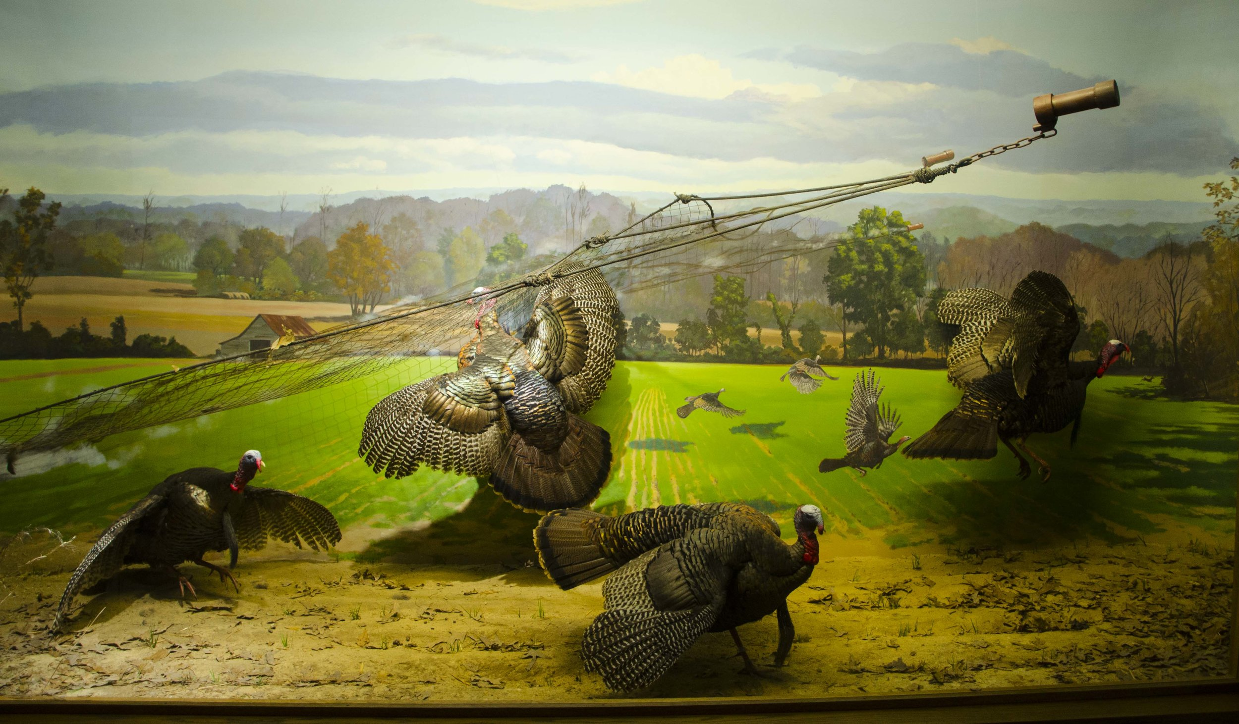 Awesome rocket-netting diorama!(SCDNR photo by D. Lucas)