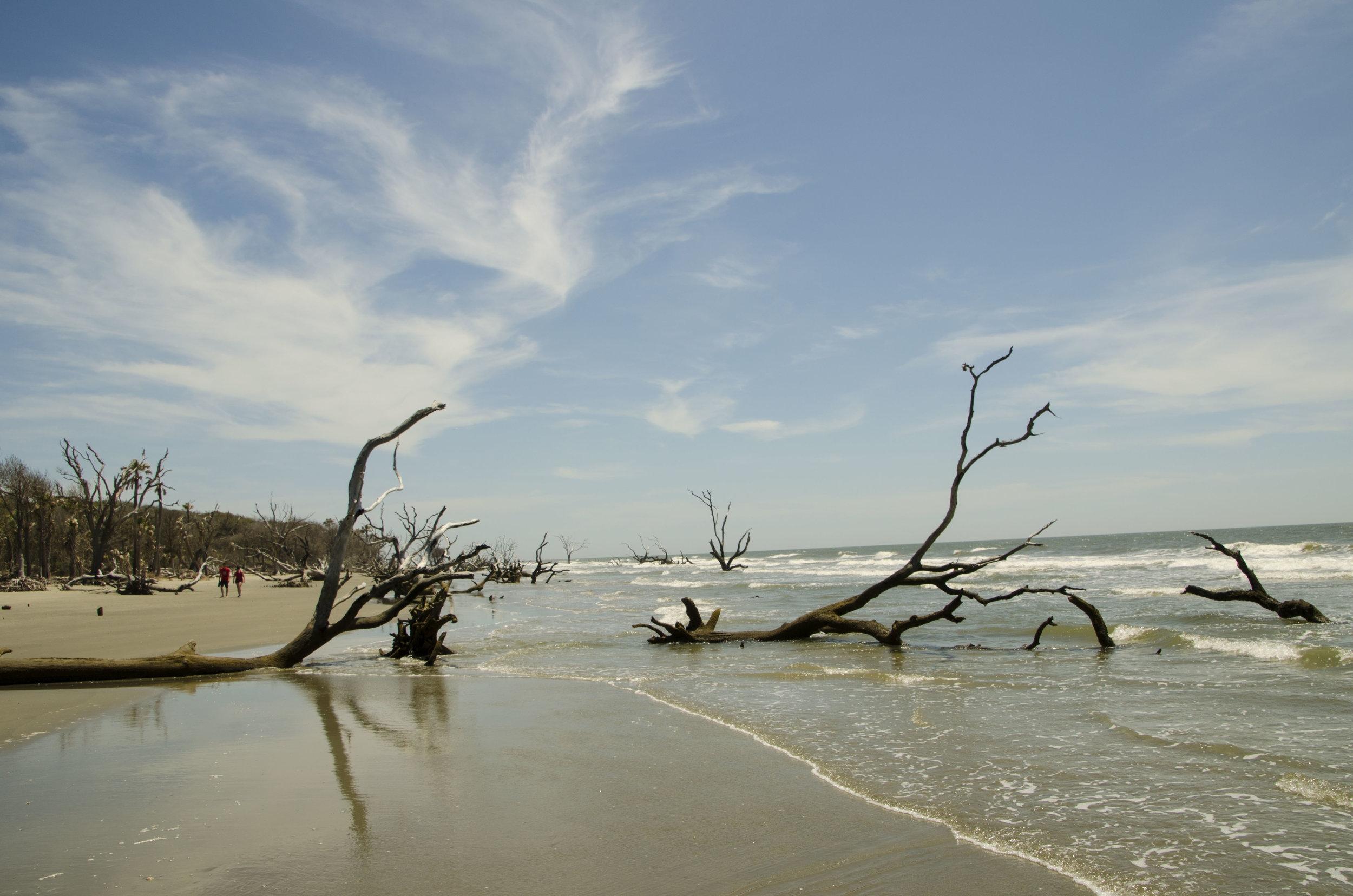 Exploring Bulls Island's miles of deserted boneyard beach.