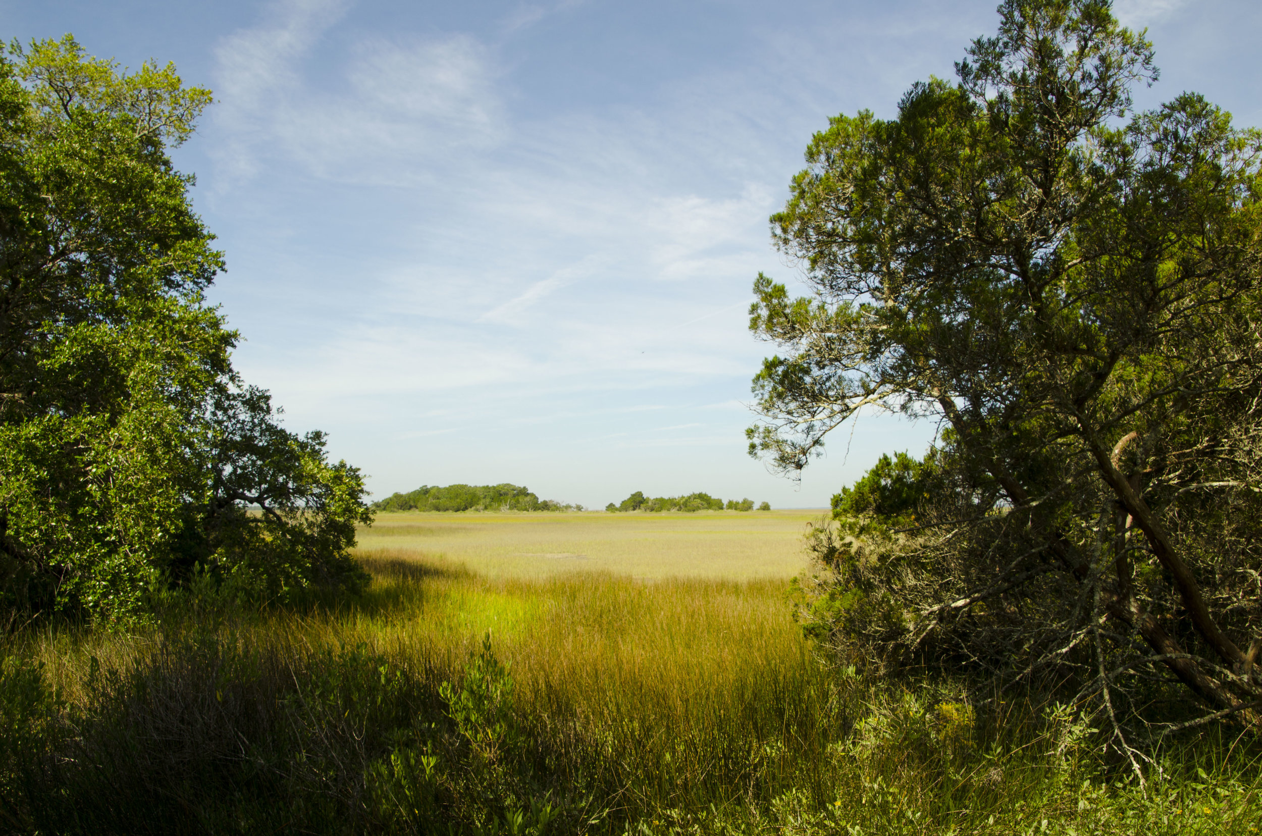 View of the saltmarsh from the Beach Road.
