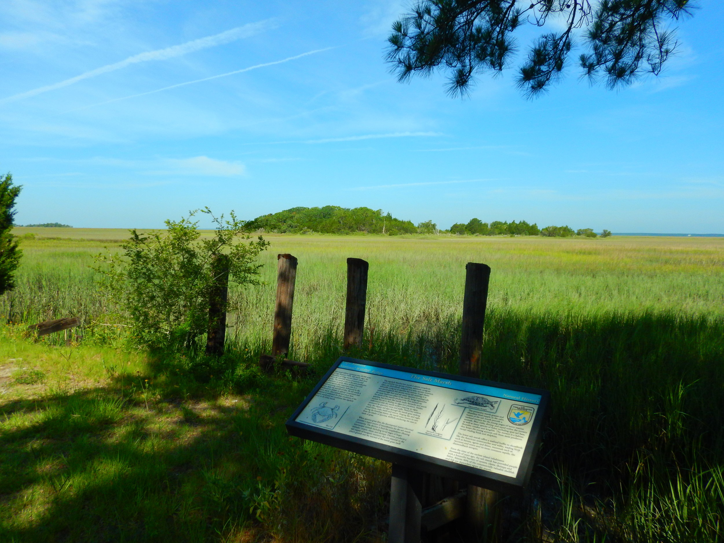 Interpretive signs along the trail explain the island's ecosystem  — Cape Romain National Wildlife Refuge is considered one of the most pristine areas on the East Coast.